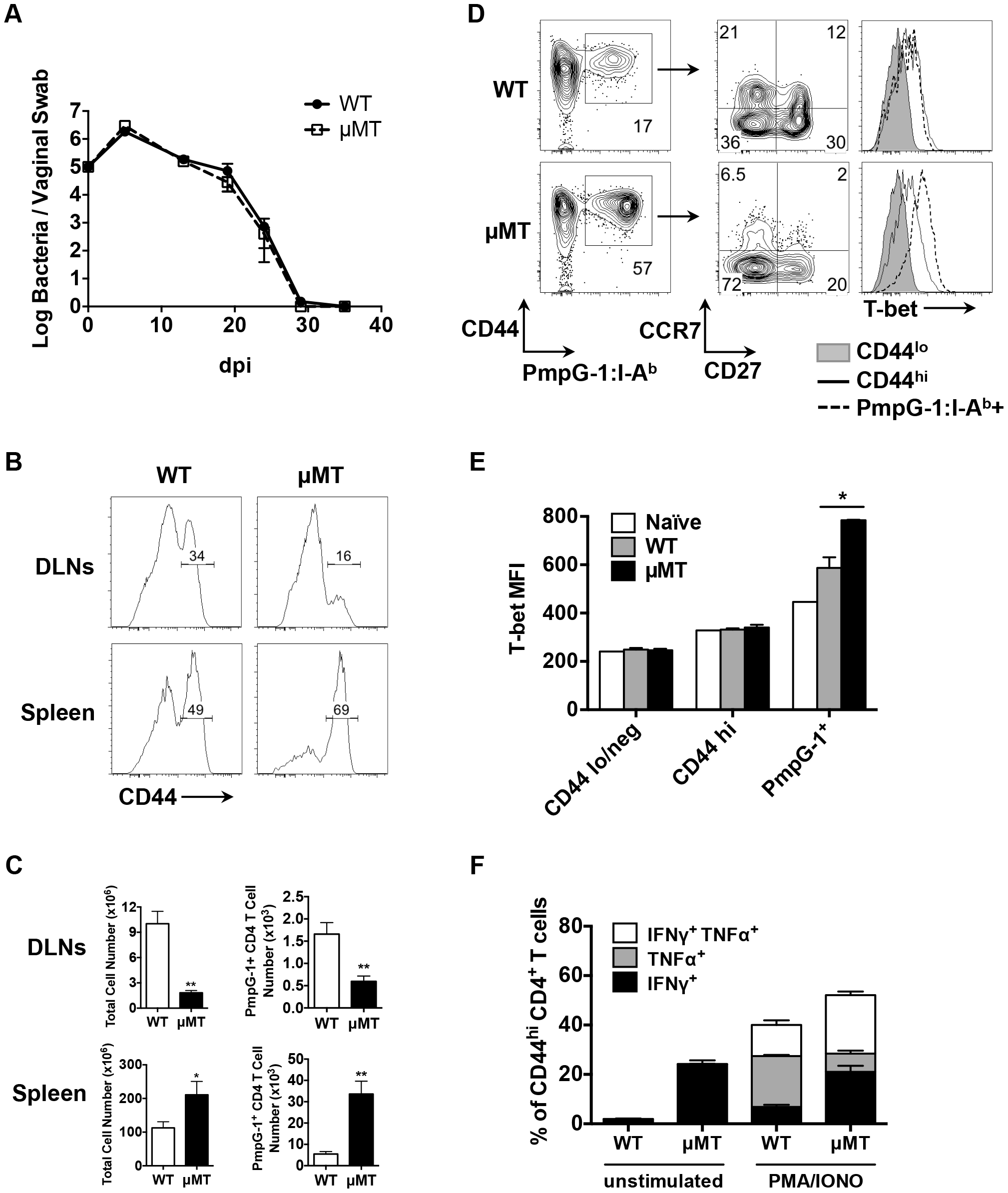 Impaired antigen-specific CD4 T cell priming in local draining lymph nodes in μMT mice after <i>C.muridarum</i> i.vag. infection.