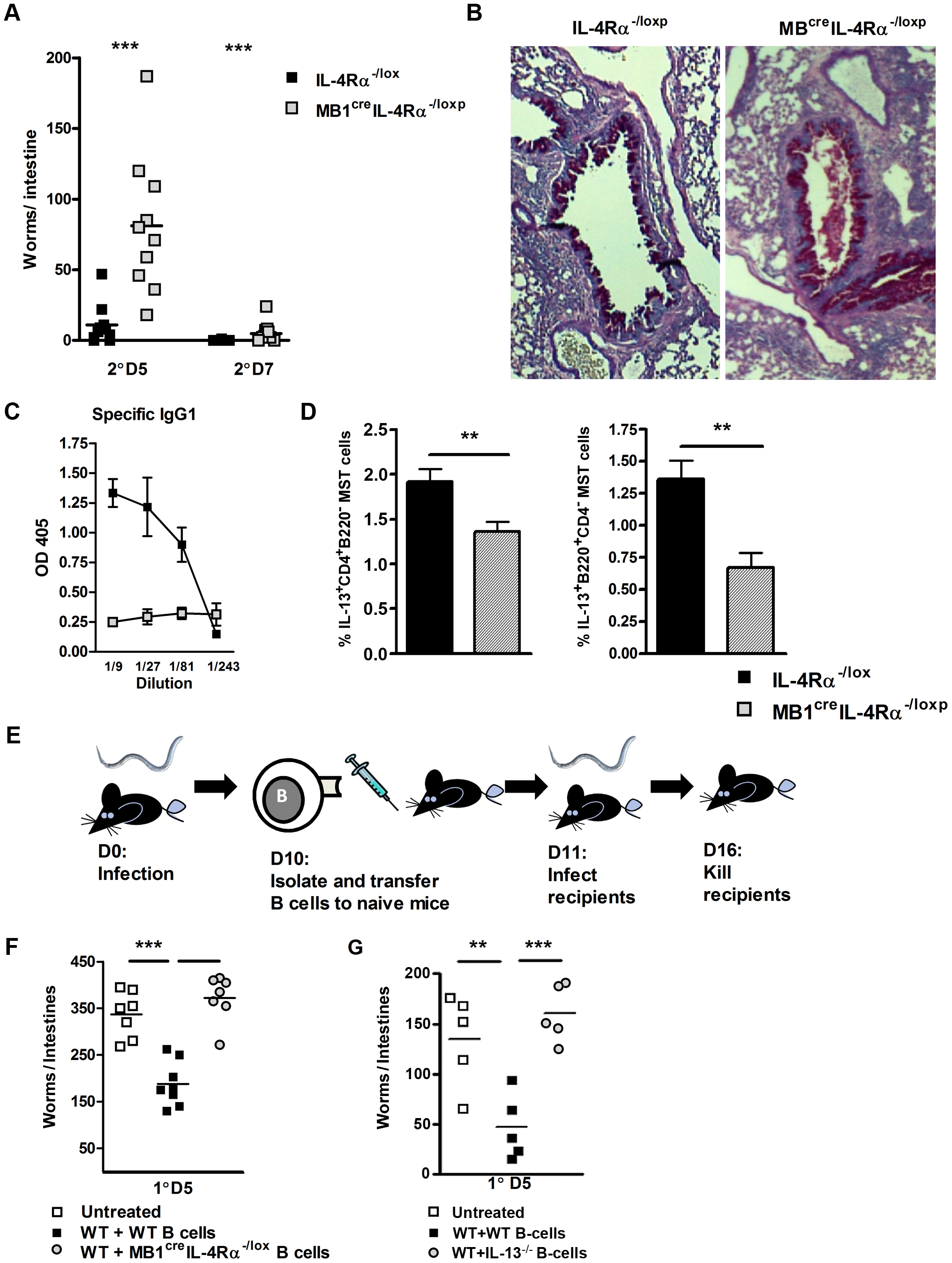 B cell IL-4Rα expression is required for optimal immunity to <i>N. brasiliensis</i> re-infection.