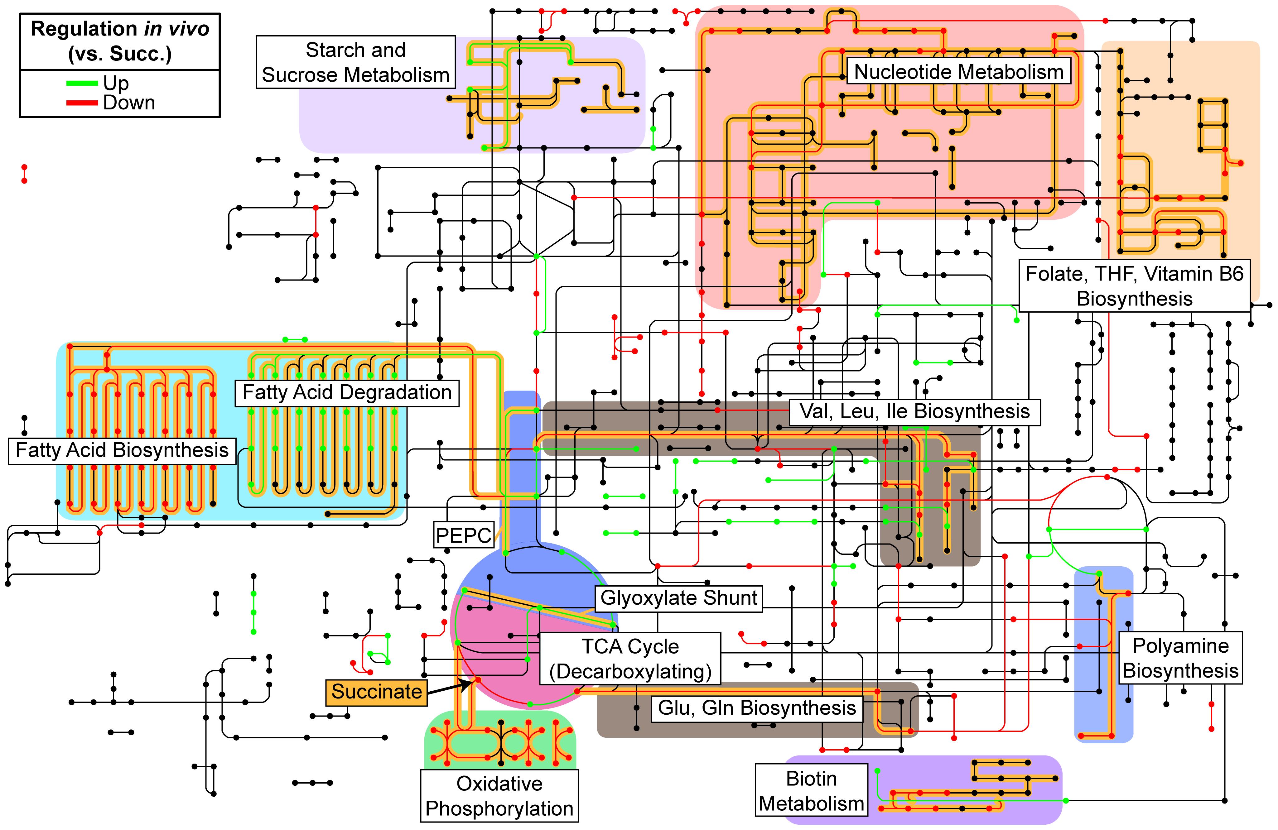 Reconstruction of <i>in vivo</i> metabolism from RNA-seq data.