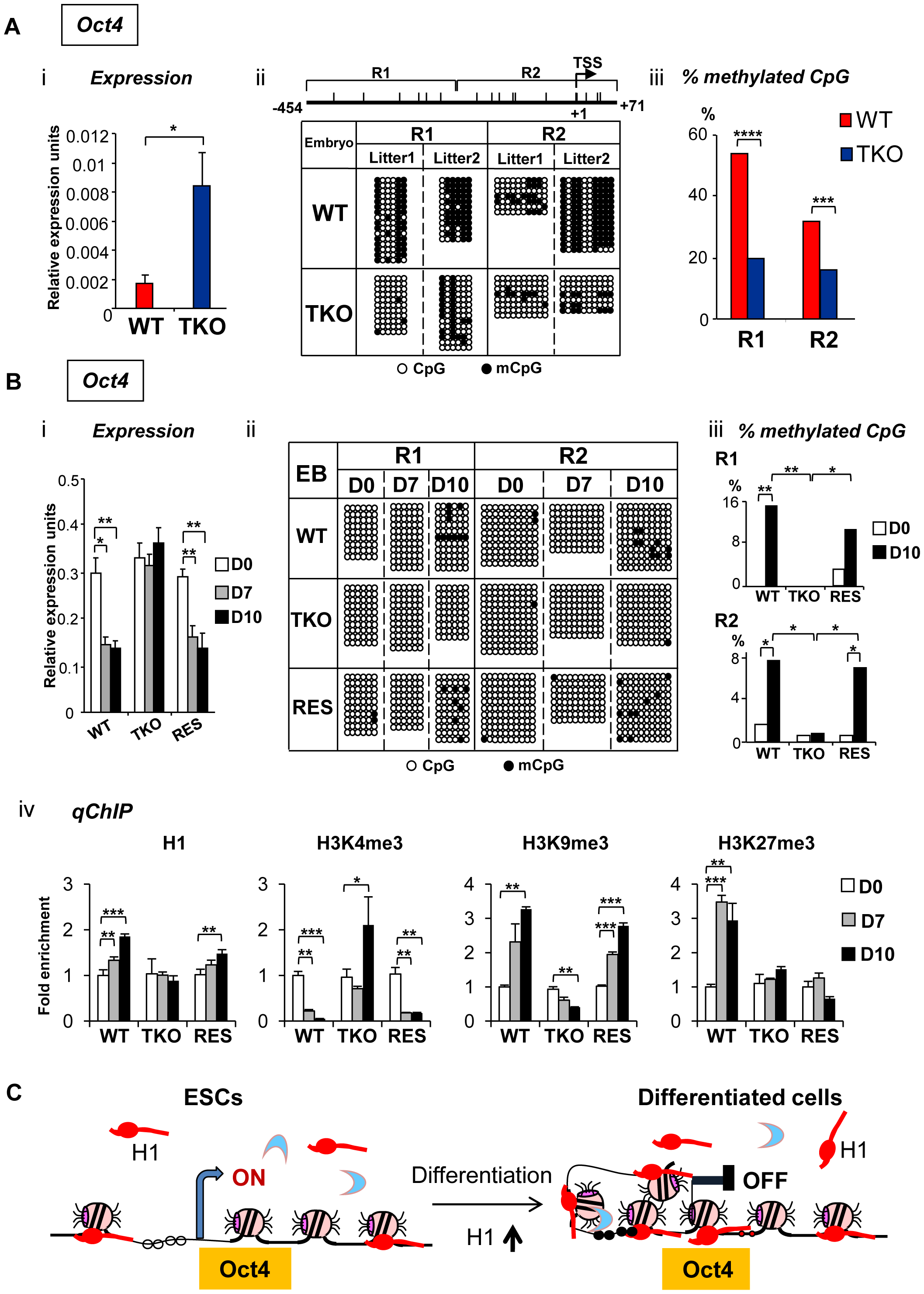H1 is necessary for stable repression of <i>Oct4</i> pluripotency gene during embryogenesis and ESC differentiation.