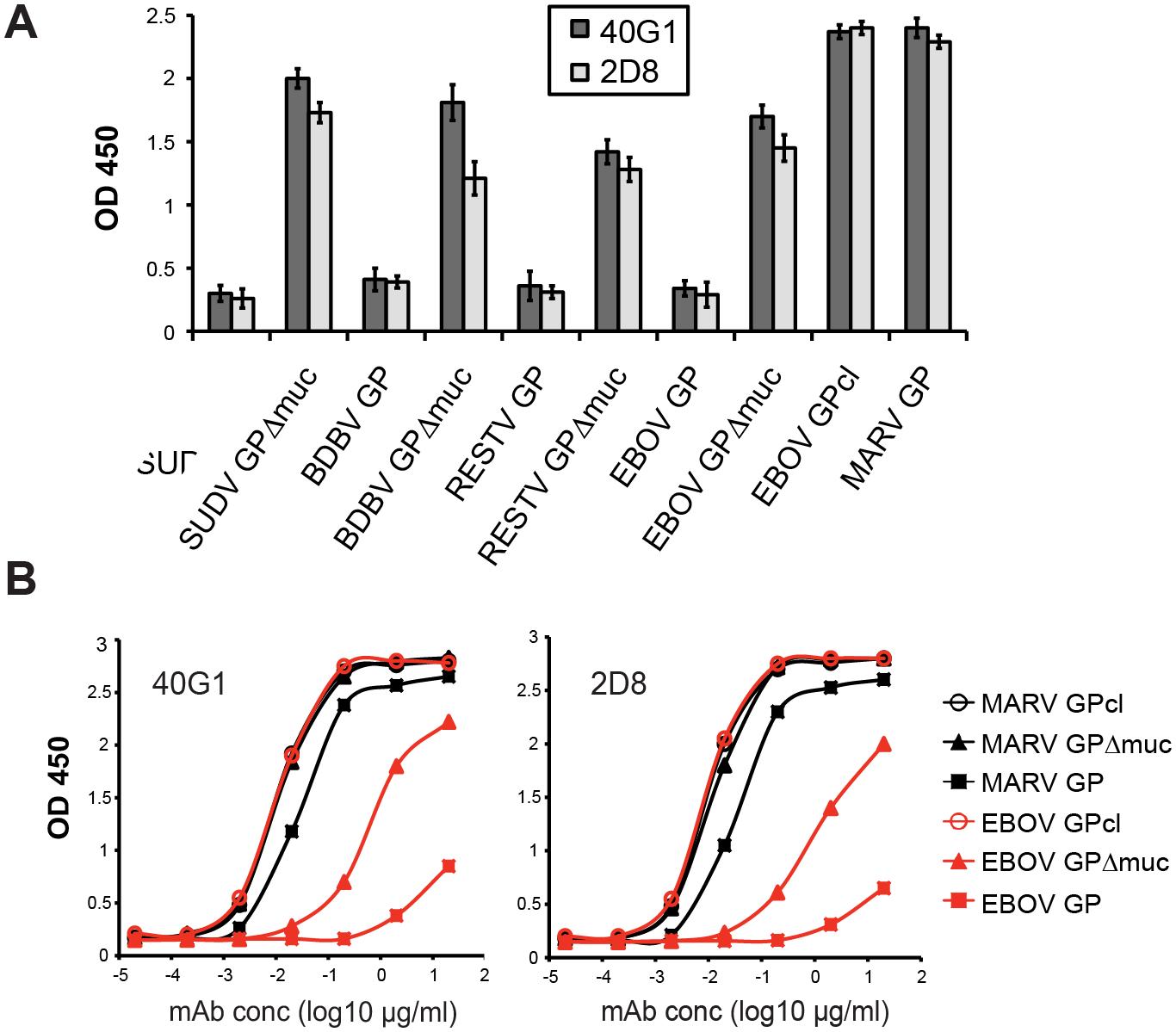 Filovirus GP cross-reactivity of 40G1 and 2D8.