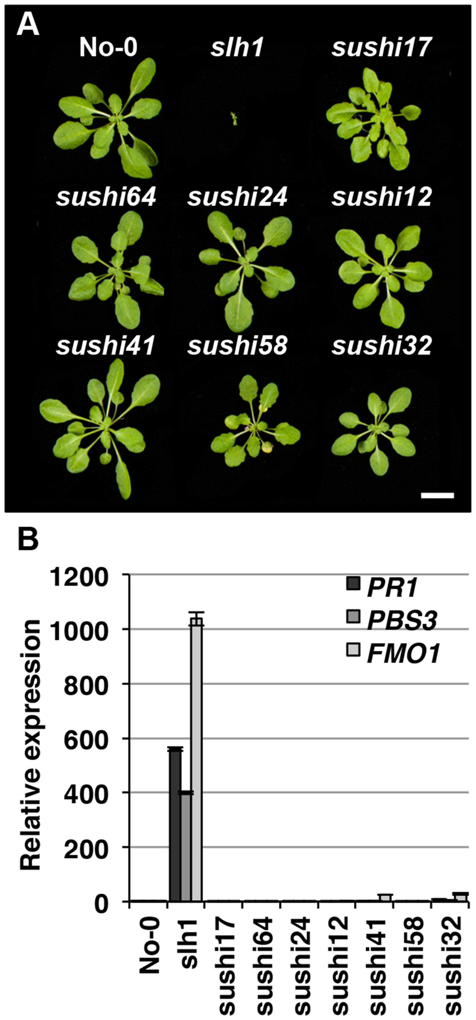 Identification of <i>sushi</i> (suppressor of <i>slh1</i> immunity) mutants.