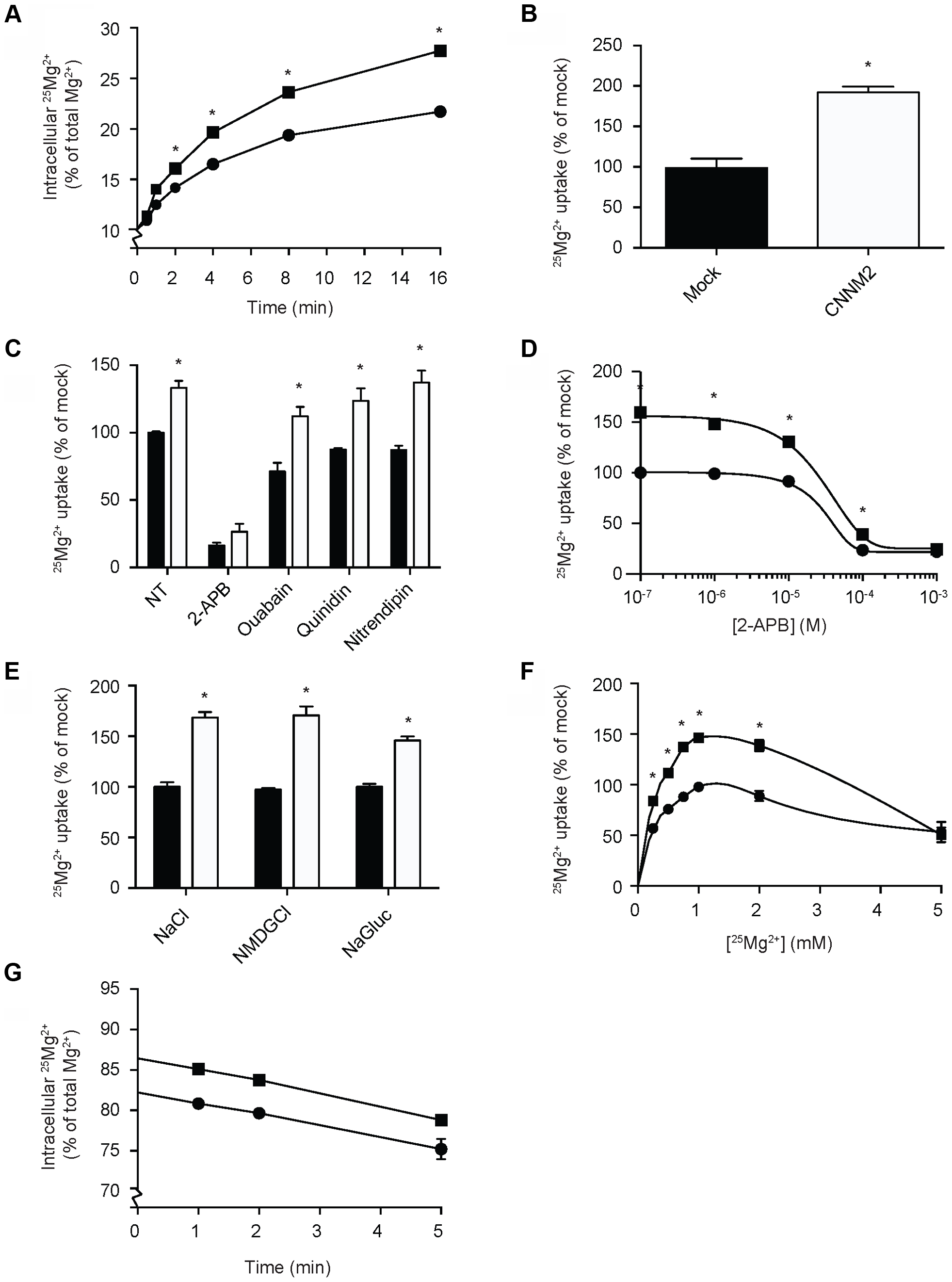 CNNM2 increases Mg<sup>2+</sup> uptake in HEK293 cells.