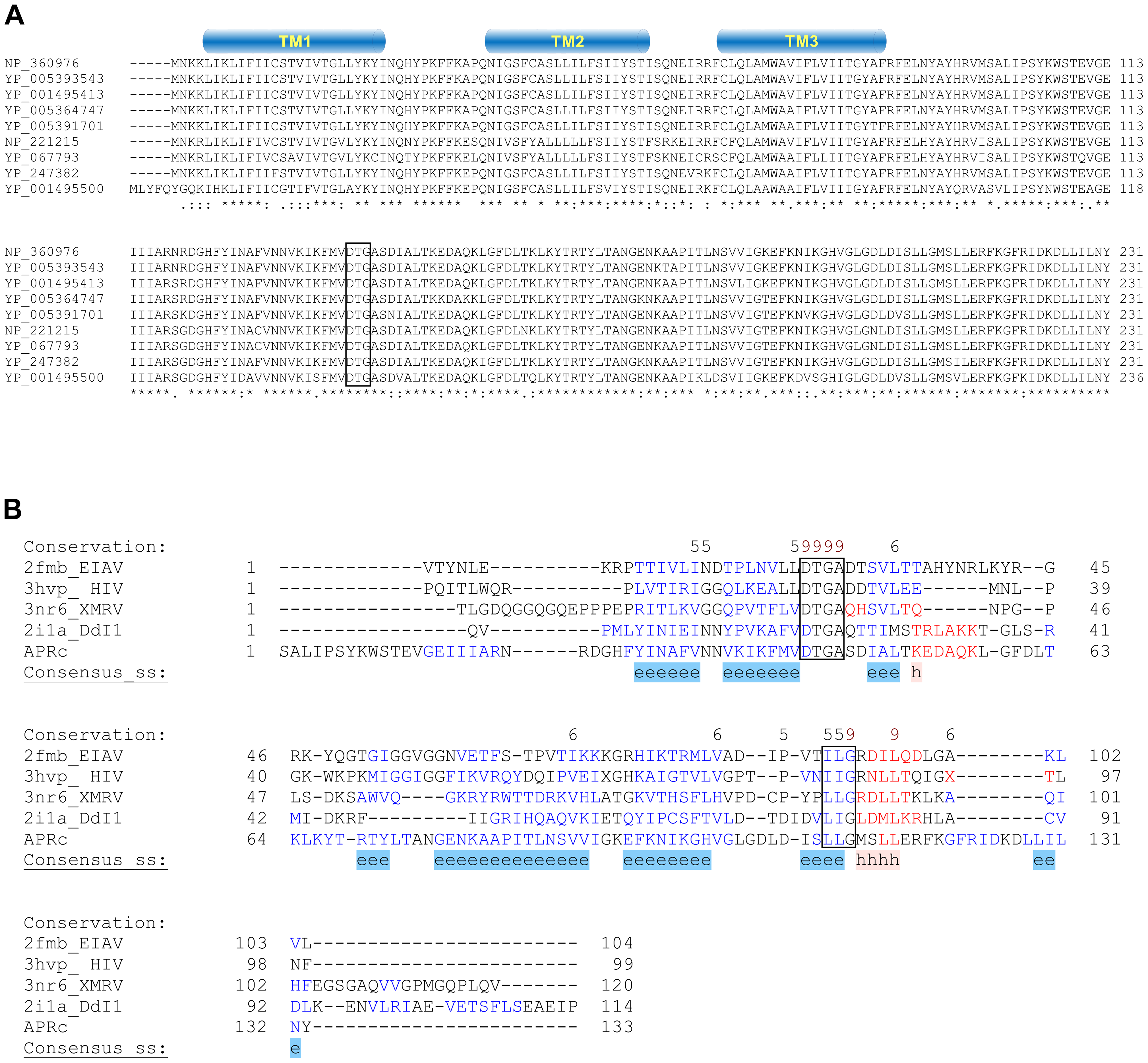 <i>RC1339/</i>APRc gene homologues from <i>Rickettsia</i> spp. display a striking pattern of sequence conservation among each other and retain structural similarity with other members of the retropepsin family.