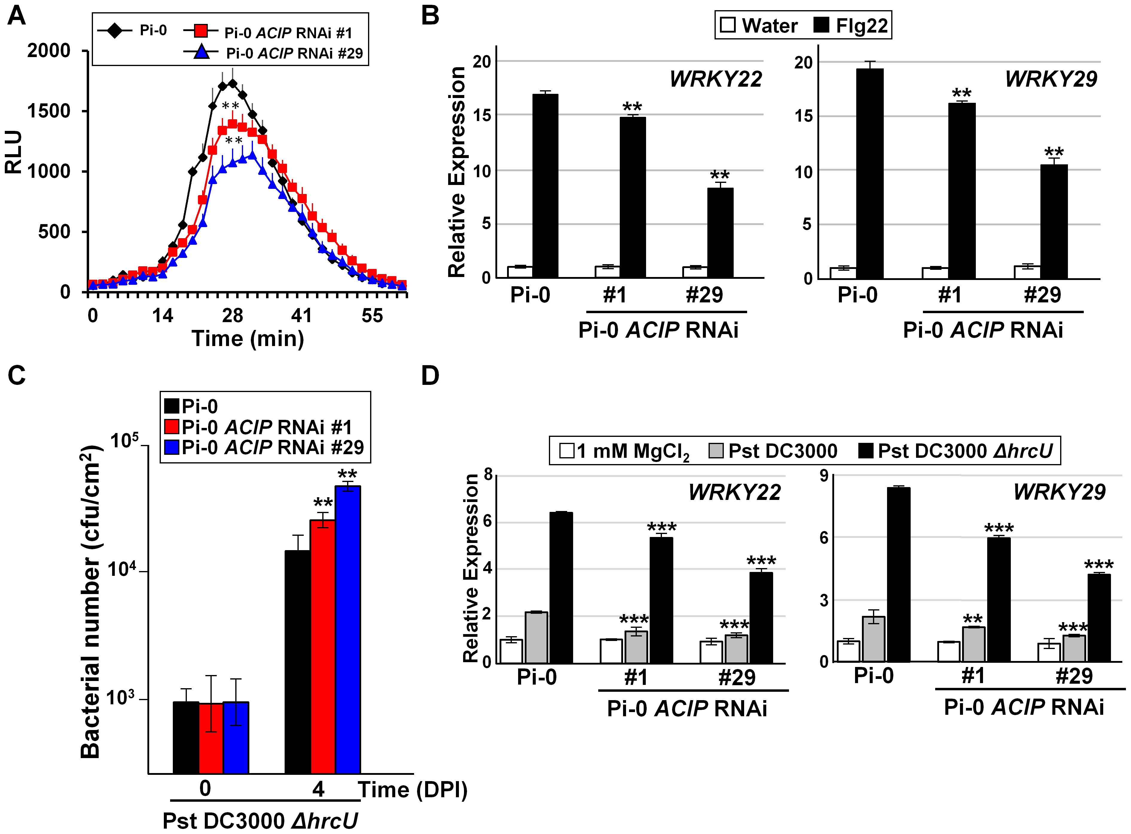 Members of <i>Arabidopsis</i> ACIP family are required for PTI.