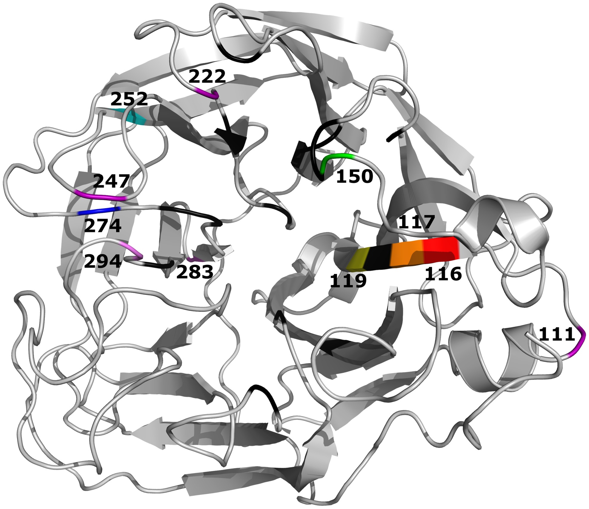 Crystal structure of the A/Vietnam/1203/04 (H5N1) NA molecule (Protein Data Bank:2HTY).