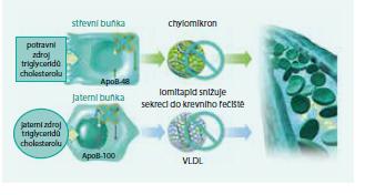 Mechanizmus účinku lomitapidu (snížení tvorby chylomikronů a snížení produkce VLDL)