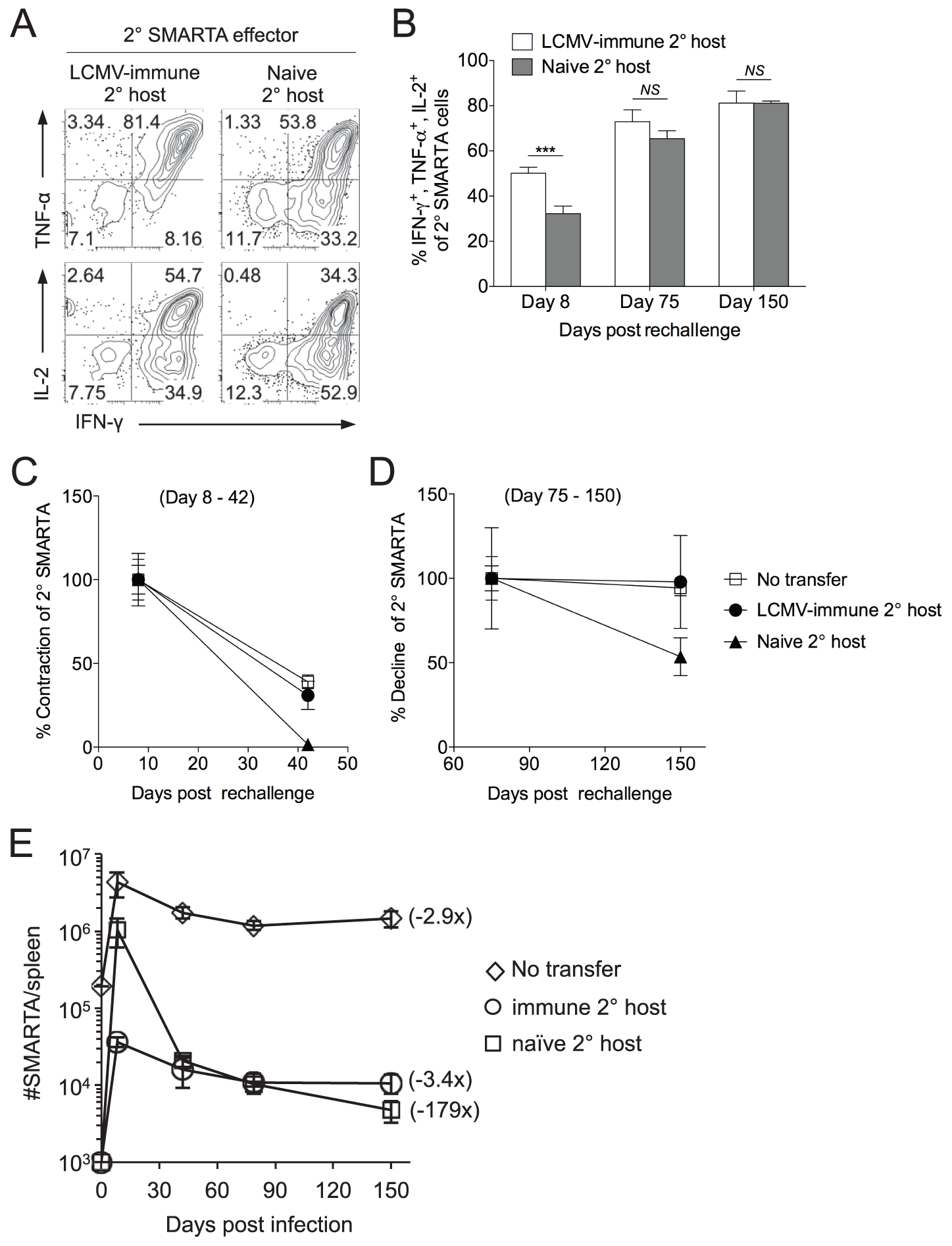 Secondary SMARTA effector cells generated after rechallenge in naïve hosts have decreased ability to produce multiple cytokines and limited memory differentiation potential.