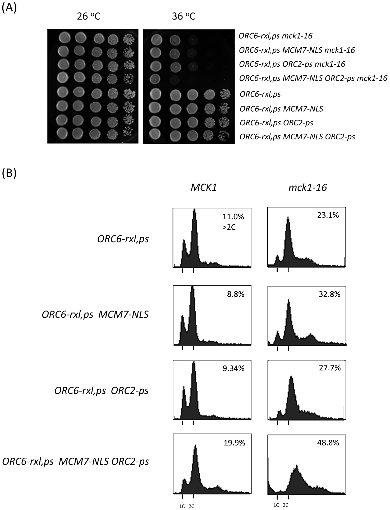 Mechanism of DNA re-replication control by Mck1 kinase is additive.