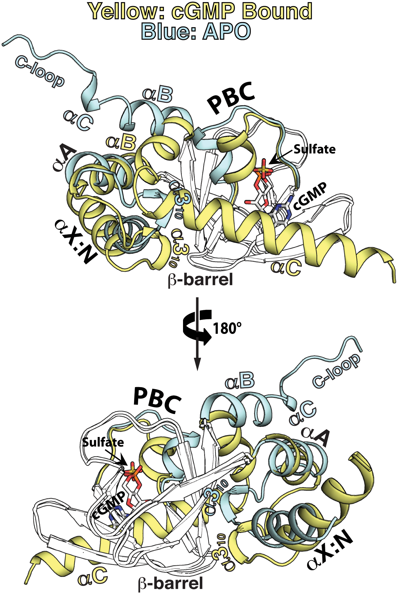 Structural comparison between the apo- and cGMP bound <i>Pf</i>CNB-D.