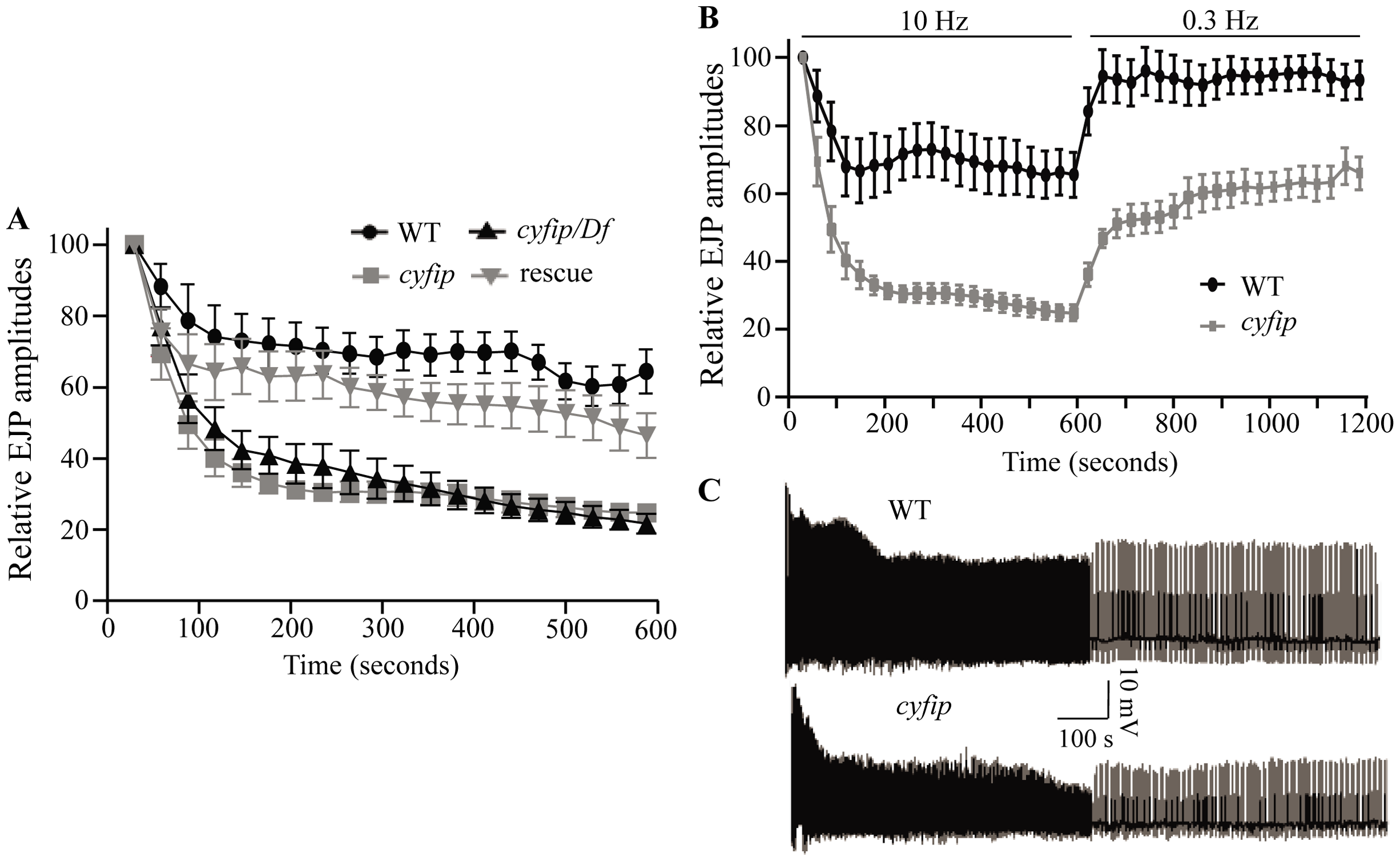 <i>cyfip</i> mutants fail to sustain normal neurotransmitter release during high-frequency stimulation.