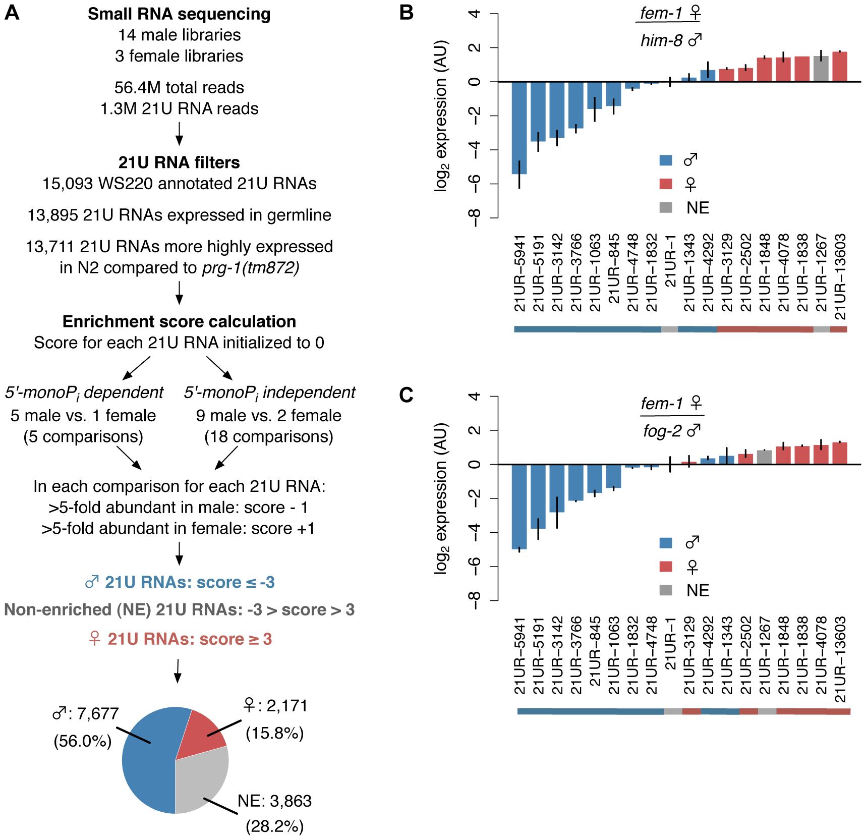 Over 70% of 21U RNAs show distinct germline enrichment.