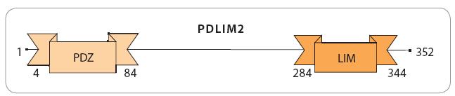 Domény PDLIM2.