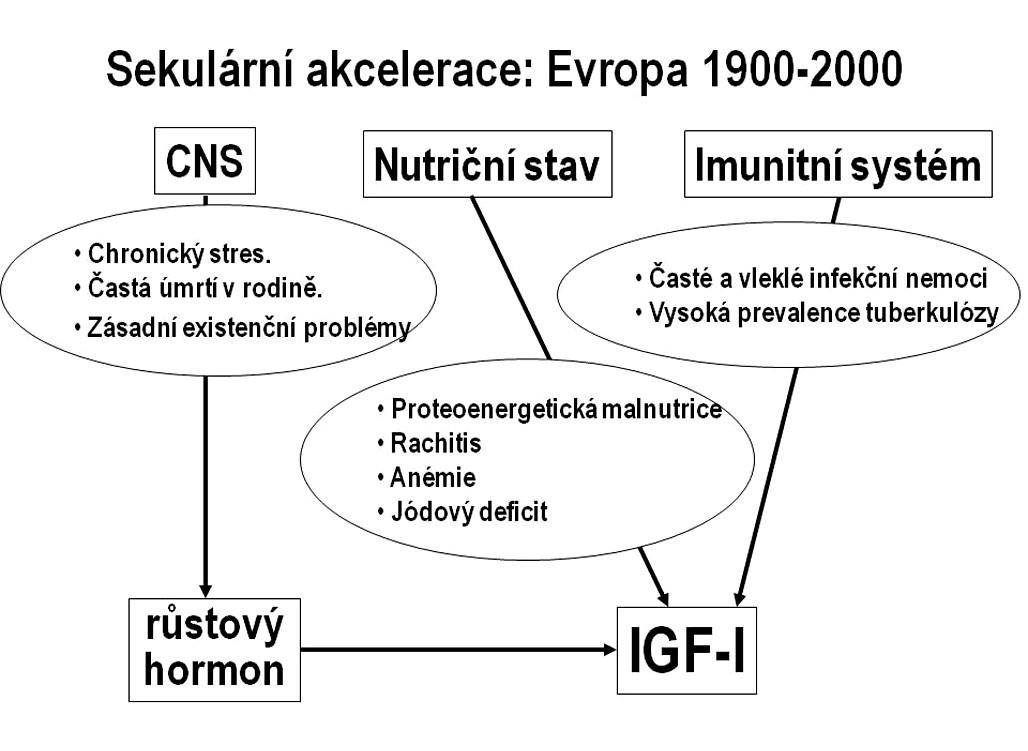 Příčiny sekulární akcelerace tělesného růstu ve vyspělých zemích. Schéma znázorňuje hlavní rušivé faktory s nepříznivým působením na osu růstový hormon–IGF-I na přelomu 19. a 20. století. Tyto faktory se během 20. století podařilo na populační úrovni eliminovat.