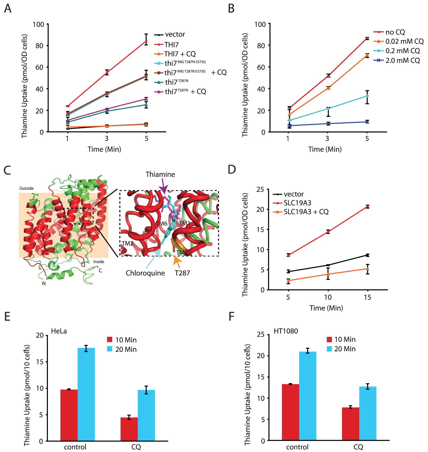 CQ inhibits thiamine transporters from yeast and human.