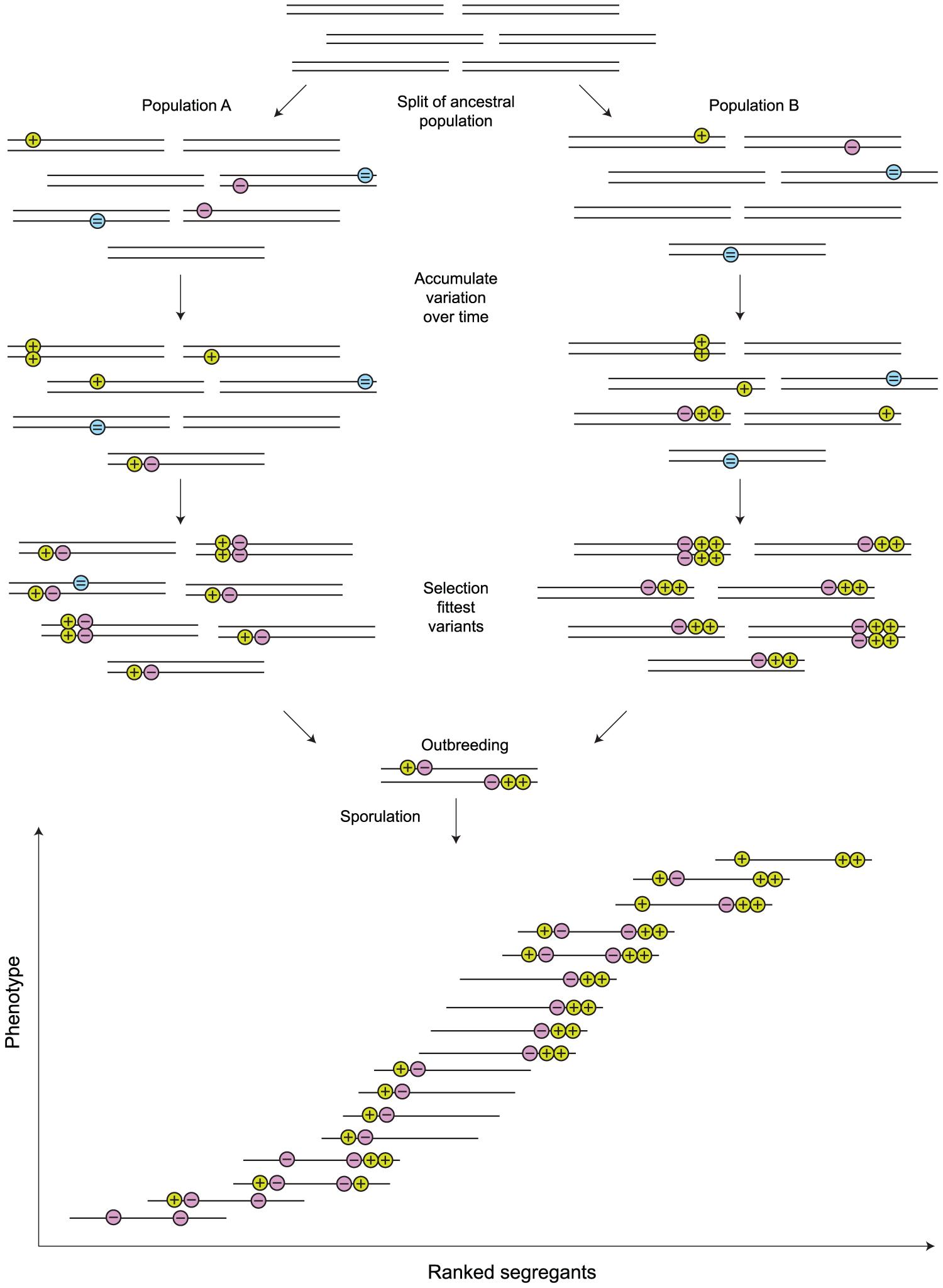 Linked quantitative trait loci (QTLs) can arise through normal population genetic processes.