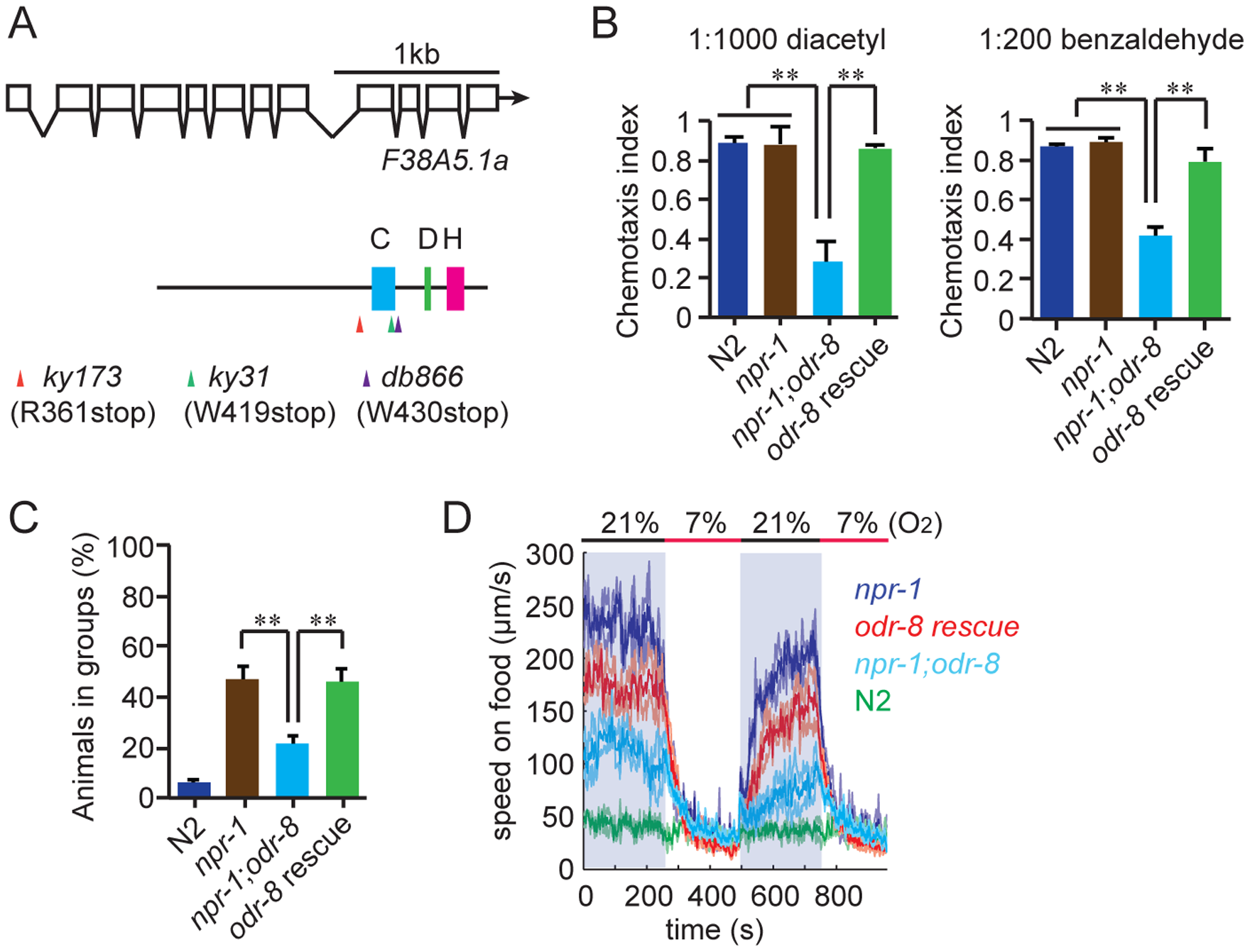 <i>odr-8</i> mutants are defective in Ufm1 specific protease 2.