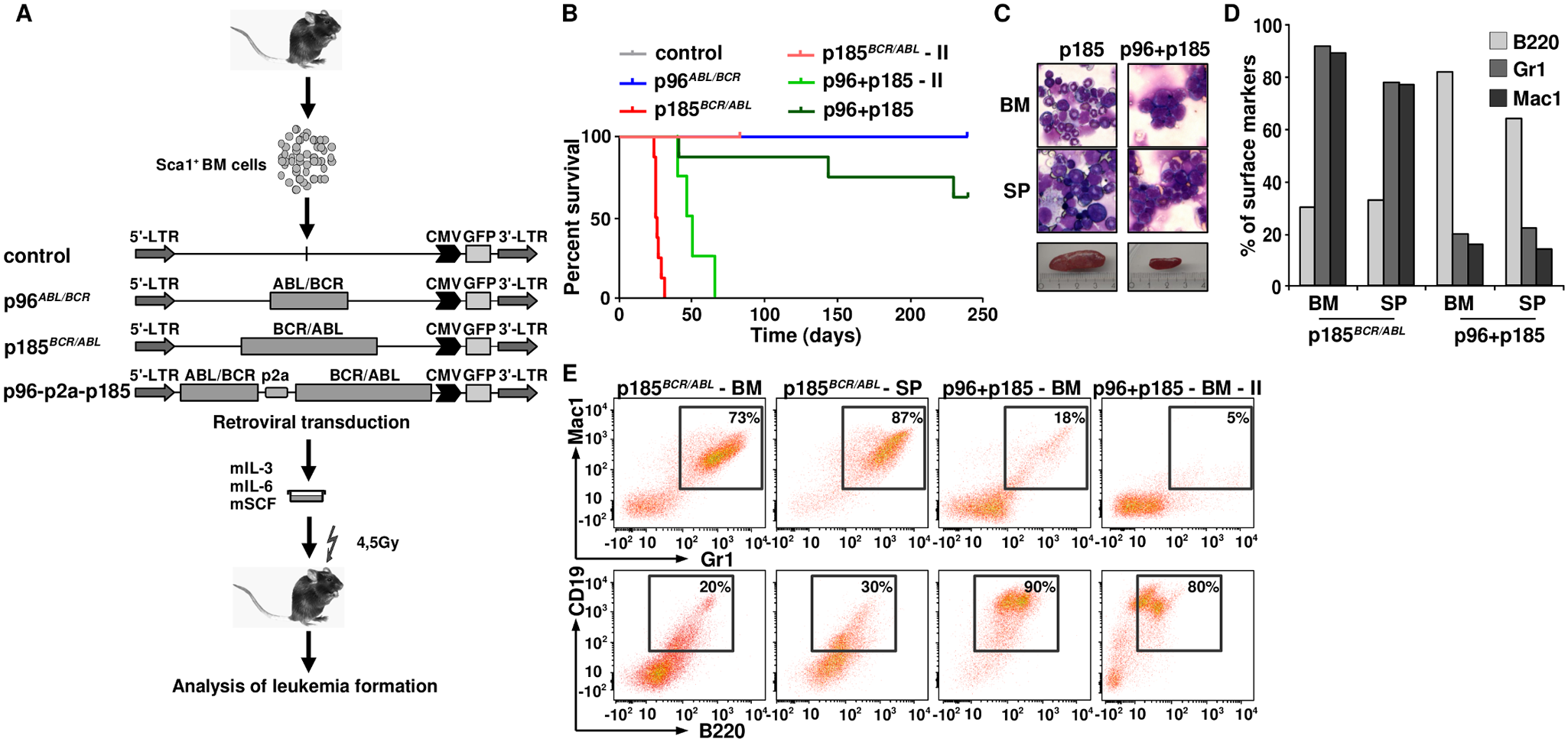 The leukemogenic potential of t(9;22) fusion proteins.