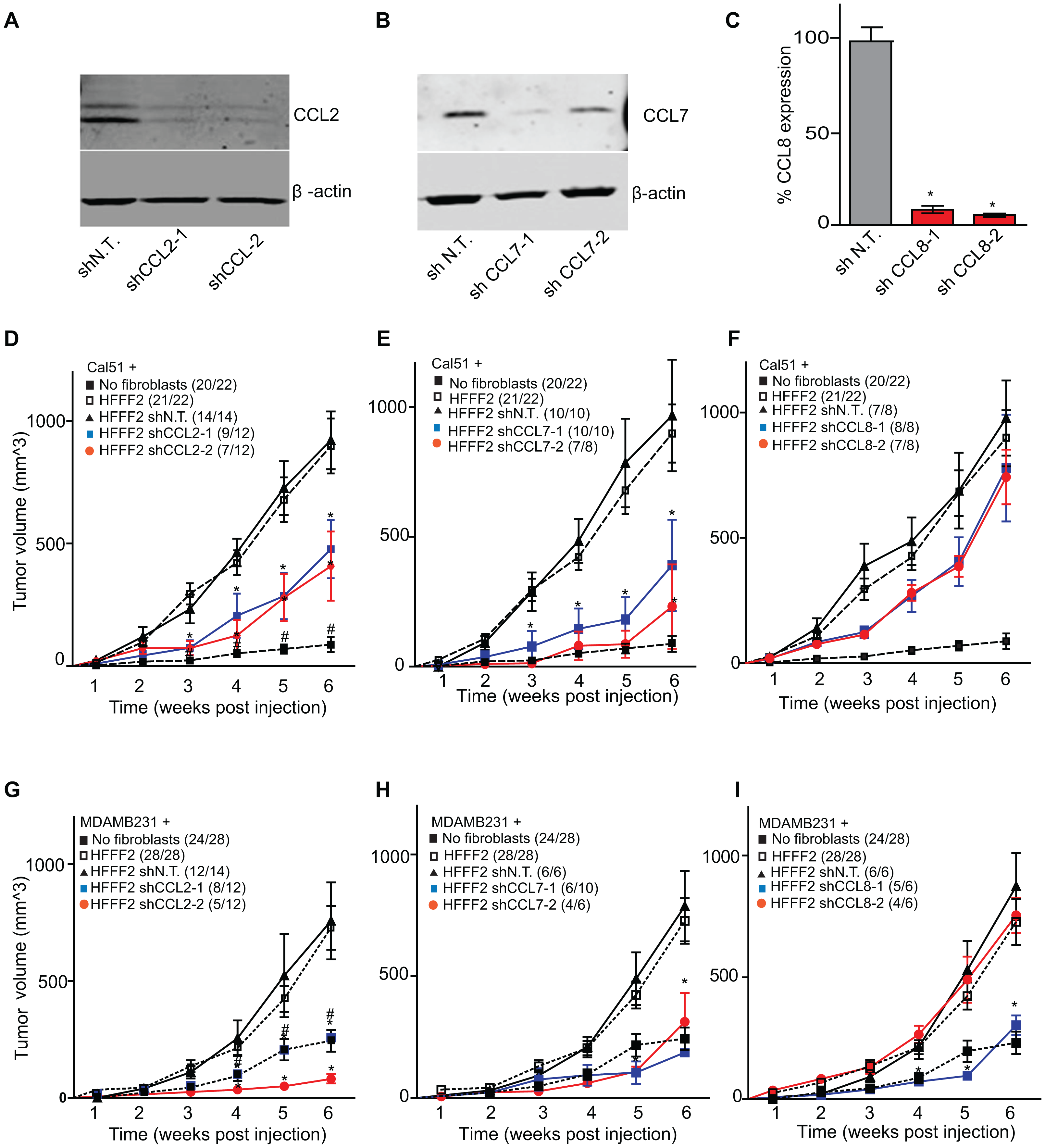 shRNA silencing of <i>CCL2</i>, <i>CCL7</i> or <i>CCL8</i> in tumor-supportive fibroblasts reduces their ability to promote tumorigenicity.