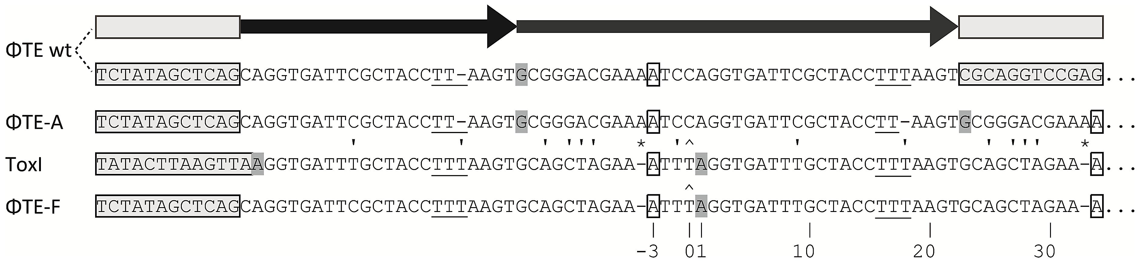 DNA alignment of ΦTE-phage escape loci and comparison with ToxI.