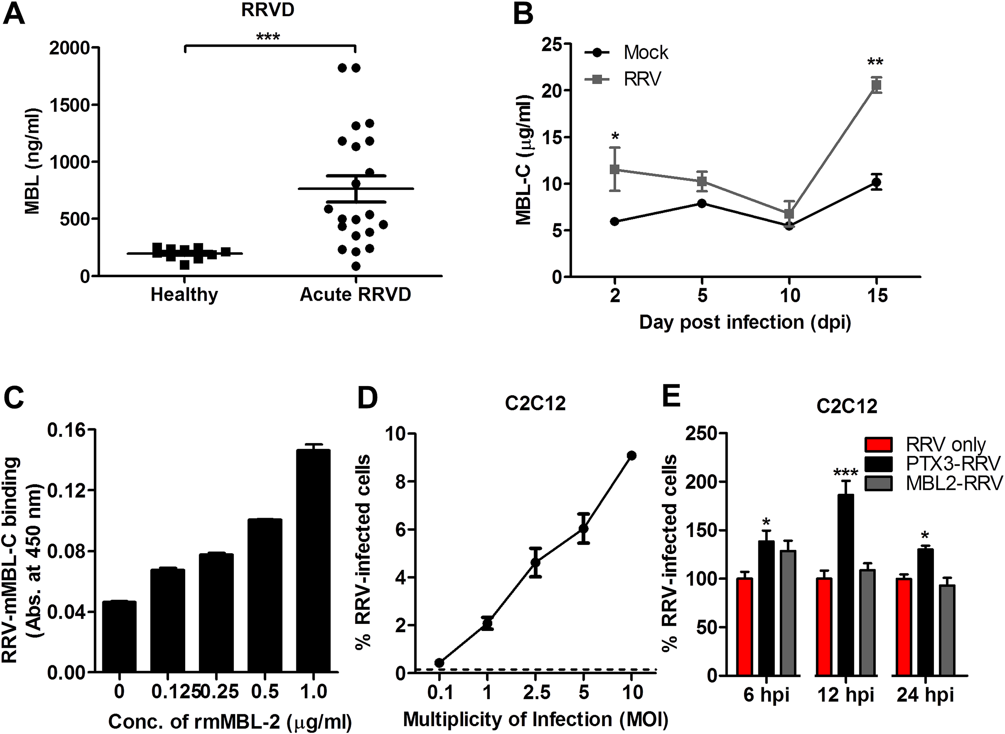 N-terminal of PTX3 is essential for binding to RRV and facilitates viral entry.