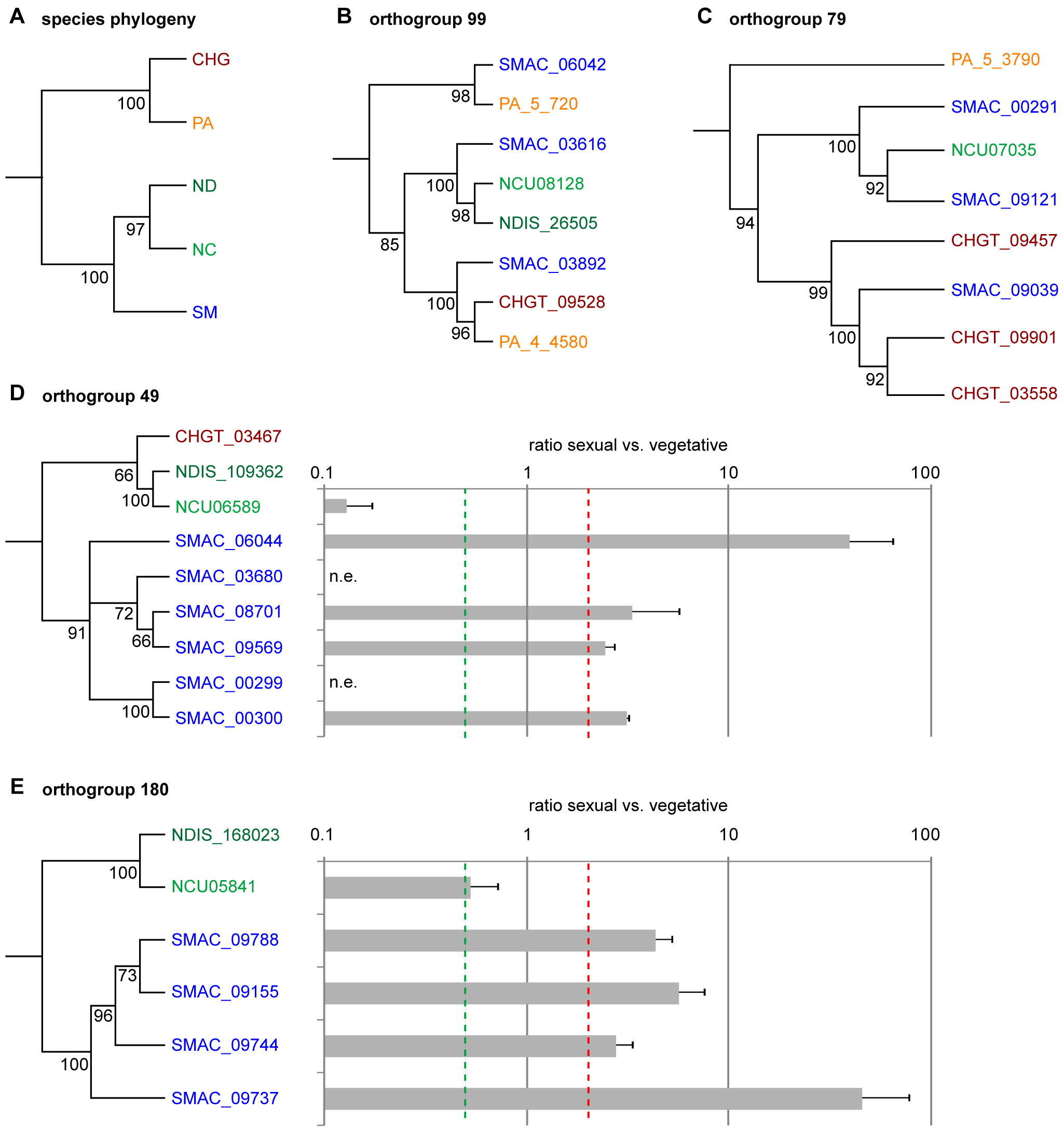 Phylogenetic analysis and expression of genes from different orthogroups from an OrthoMCL analysis of <i>S. macrospora</i> (SM), <i>N. crassa</i> (NC), <i>N. discreta</i> (ND), <i>C. globosum</i> (CHG), and <i>P. anserina</i> (PA).