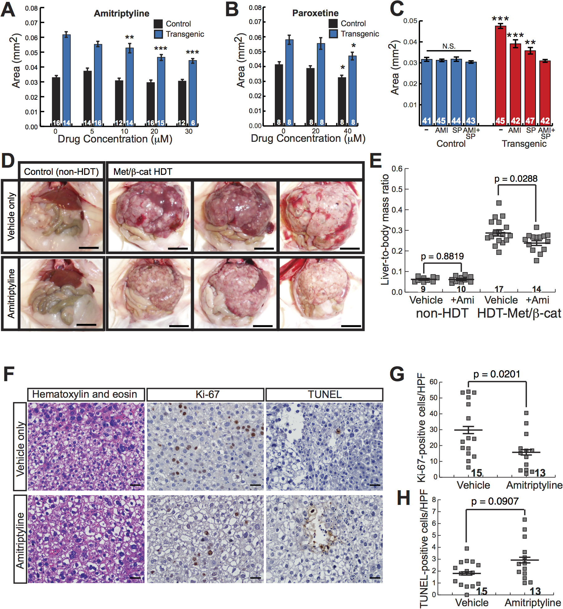 Antidepressants decrease β-catenin-induced liver enlargement and tumorigenesis.