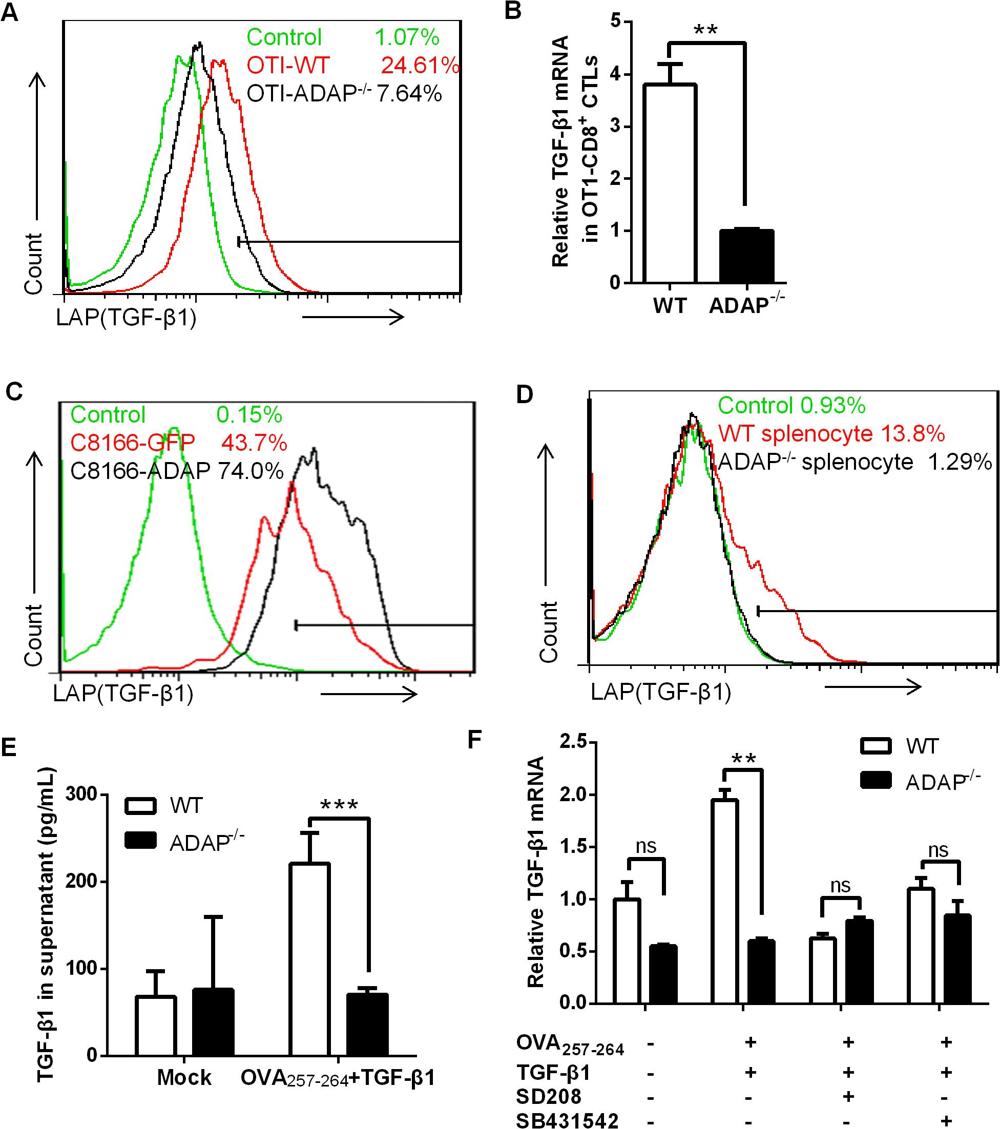 ADAP regulates TGF-β1 production in T cells via an autocrine manner.