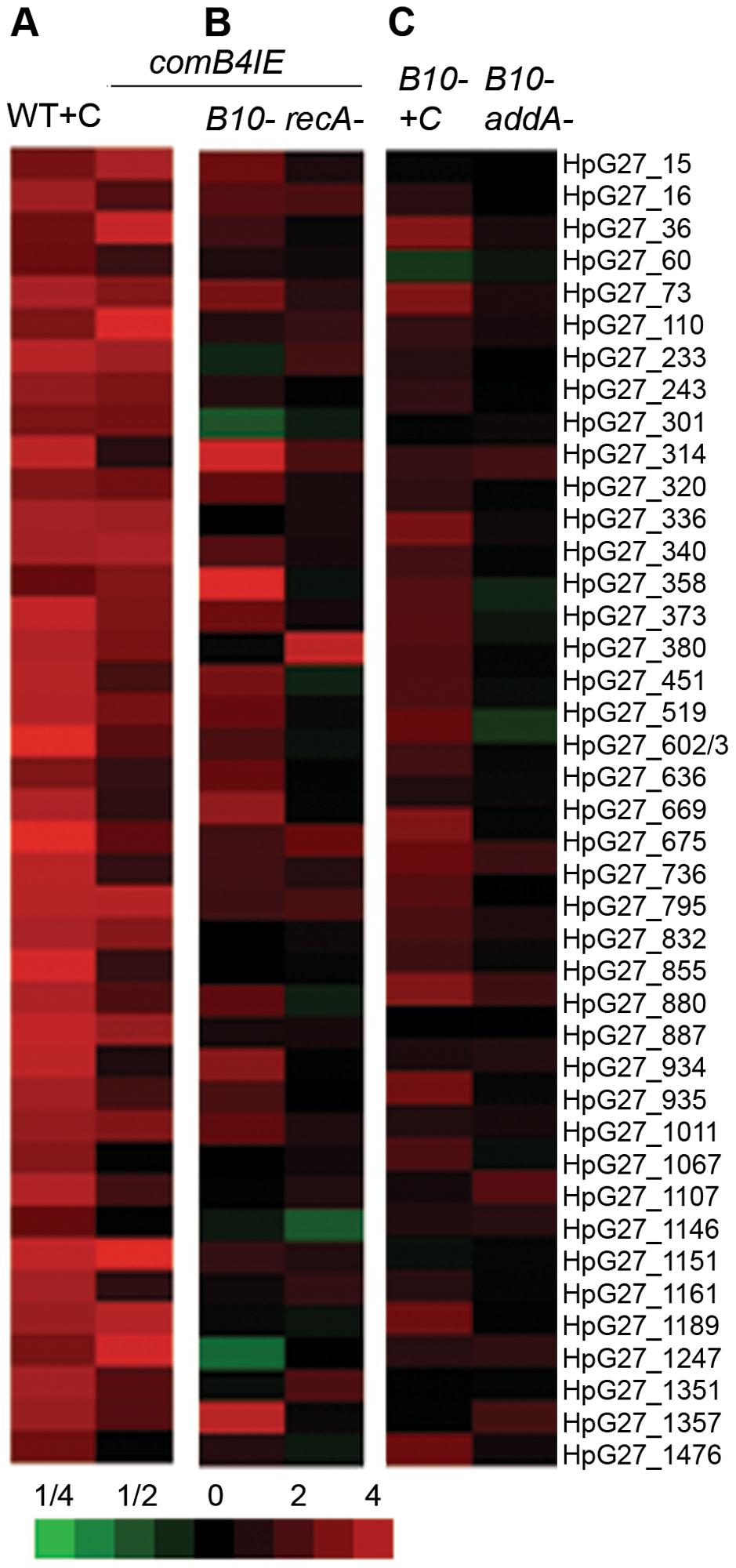 <i>com</i> T4SS control of the DNA damage response.