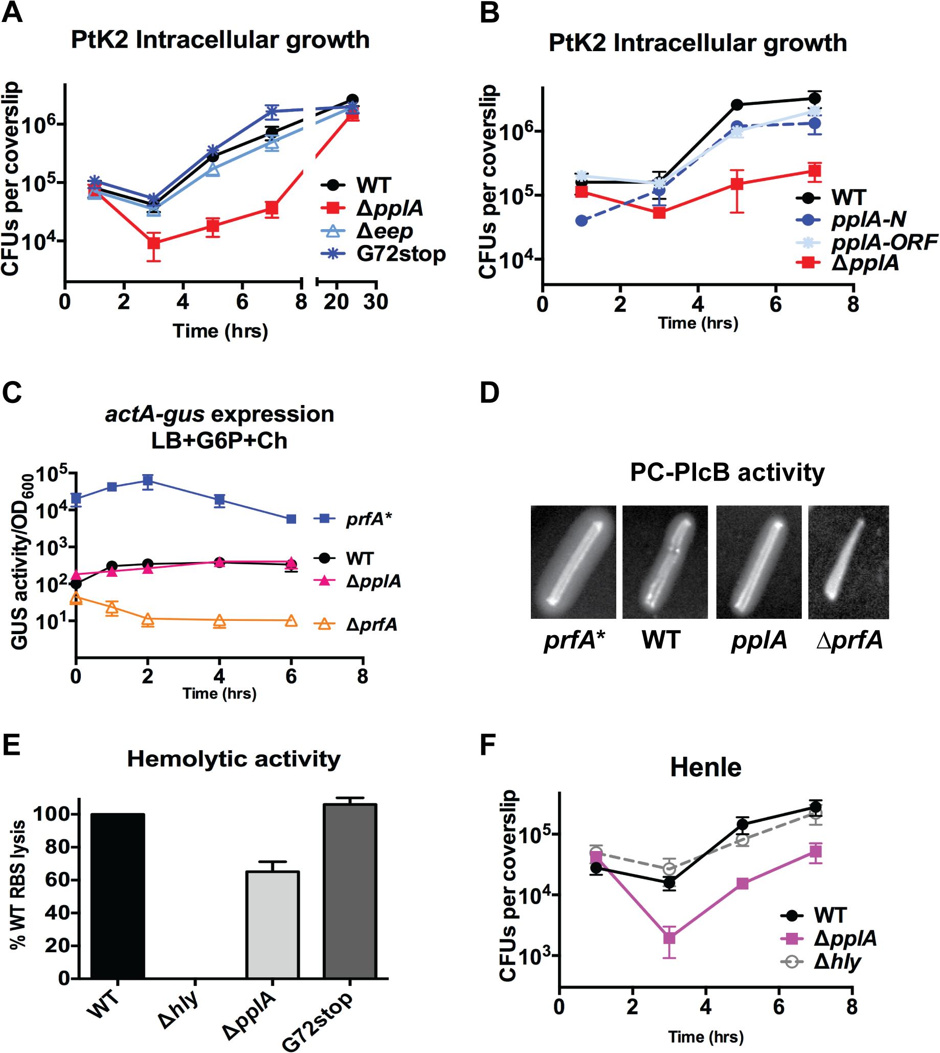 pPplA enhances <i>L</i>. <i>monocytogenes</i> vacuolar escape in host cells.