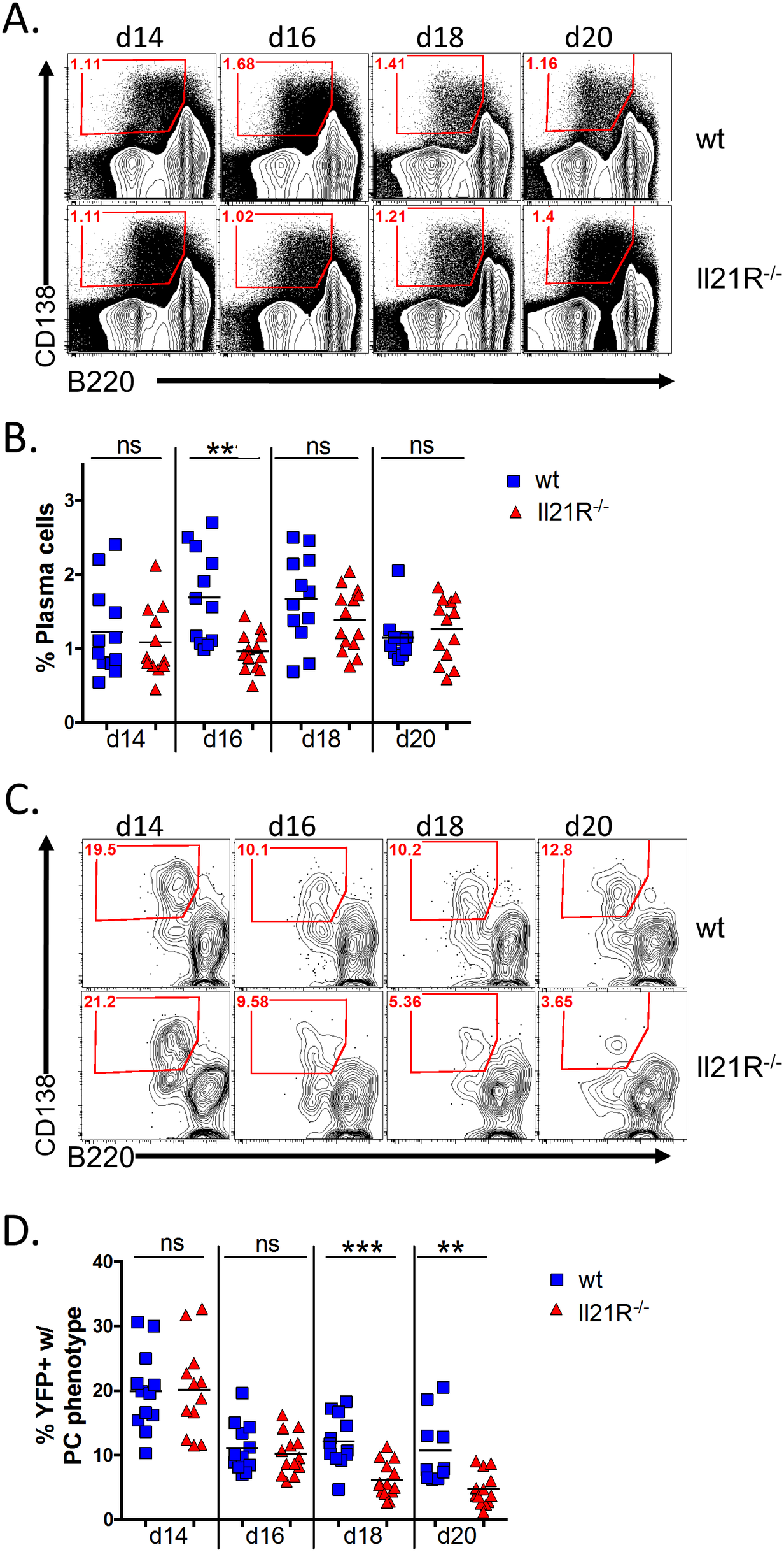 IL-21 is required for generation of infected PCs at late time points during the onset of latency.