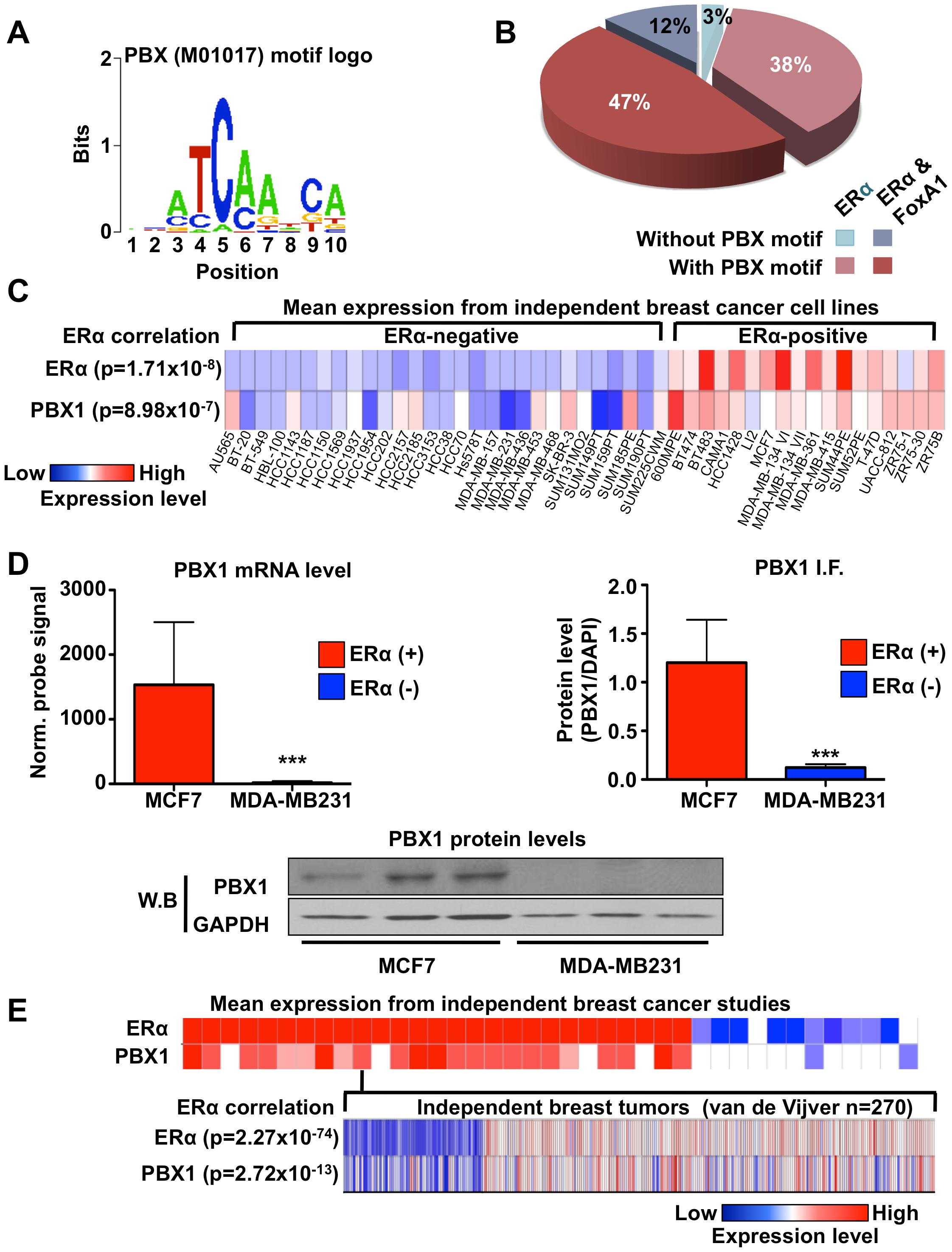 PBX1 correlates with ERα.