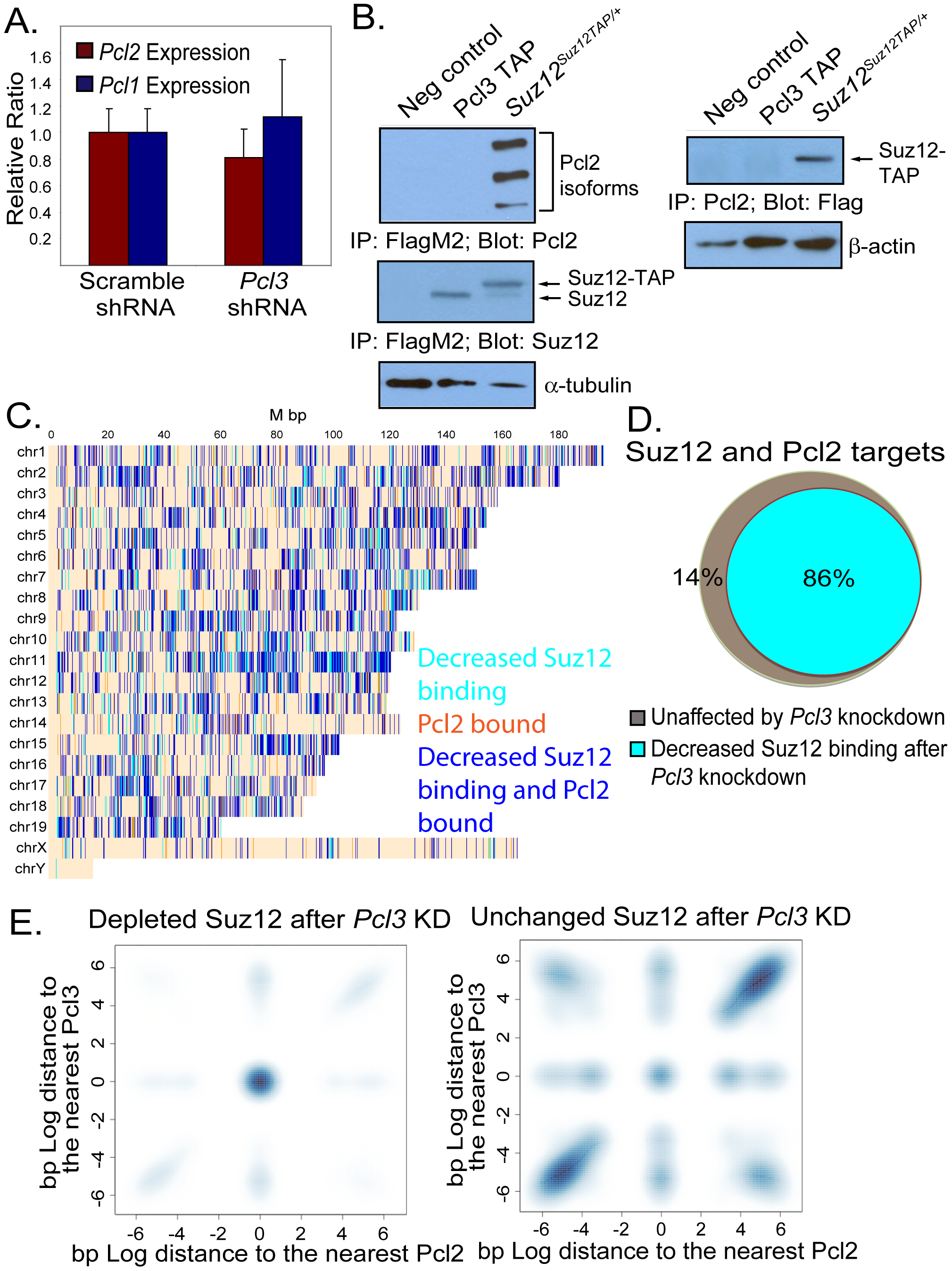 Pcl3 and Pcl2 participate in separate PRC2 complexes but overlap at many PRC2 binding sites.