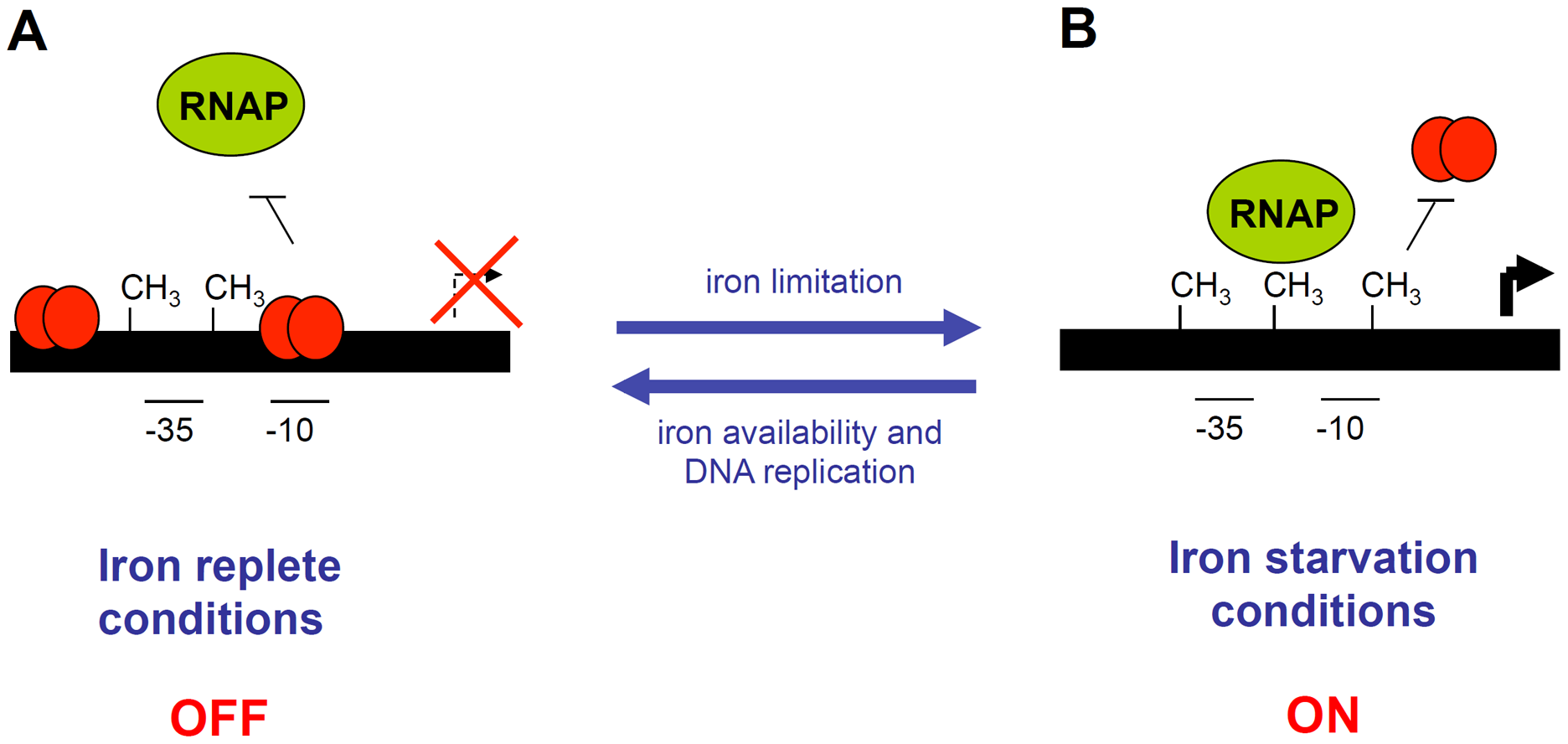 Schematic representation of the EAEC <i>sci1</i> T6SS gene cluster epigenetic switch regulatory mechanism.