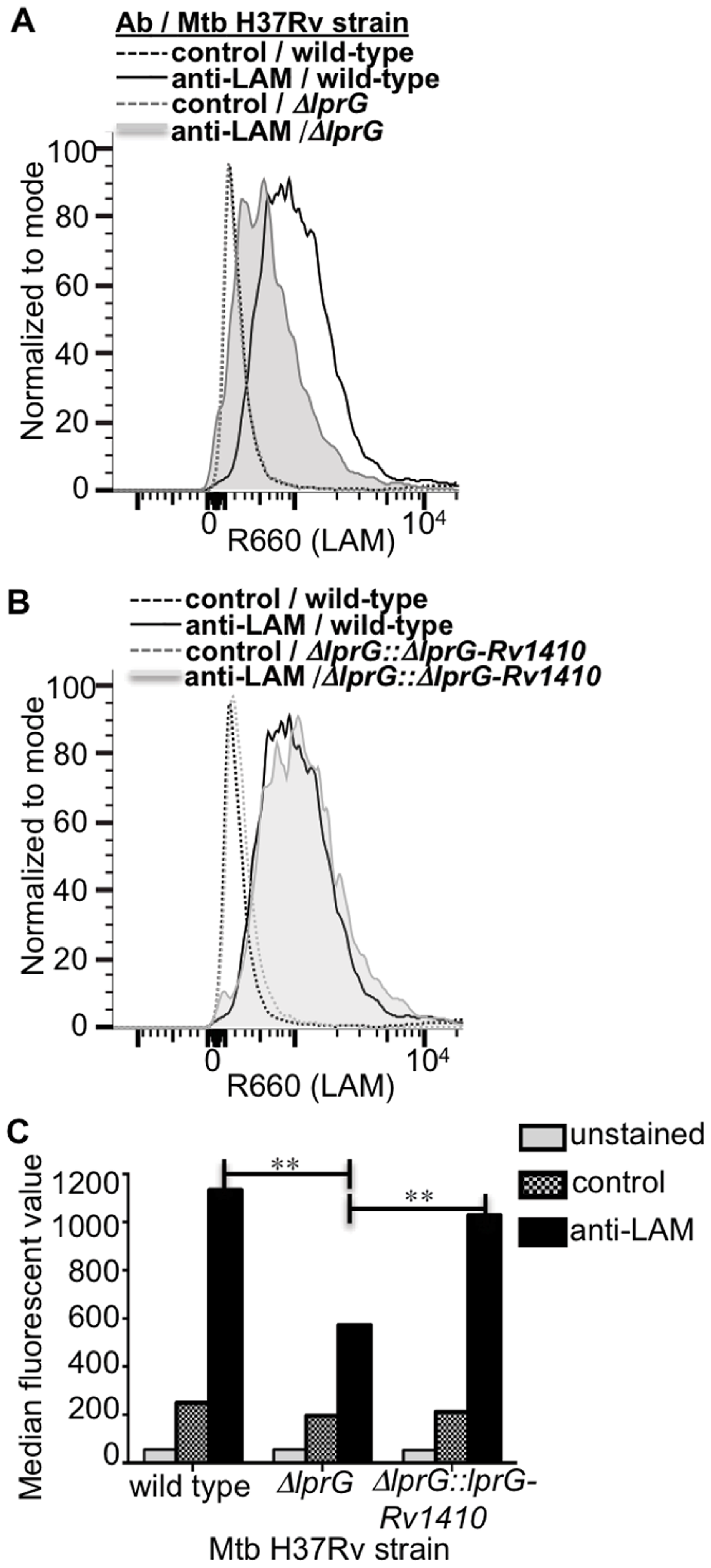 Deletion of <i>lprG</i> reduces LAM expression on the Mtb cell surface.