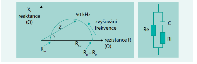 Schéma. Typický průběh bioimpedančního vektoru v komplexní rovině při frekvenci proměnné od nuly až po řádově MHz a schéma náhradního elektrického obvodu simulujícího impedanci živé tkáně