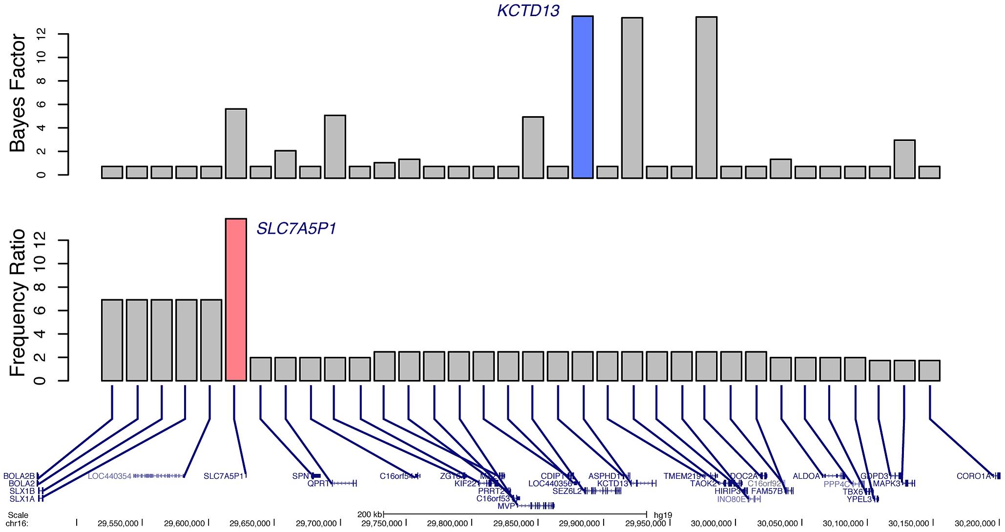 Prioritization of candidate genes at the 16p11.2 locus. Bottom
