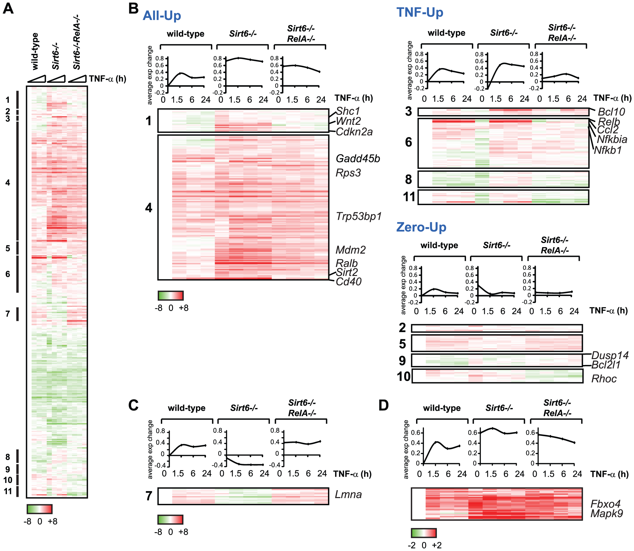 Gene expression consequences of interplay between RelA and Sirt6.
