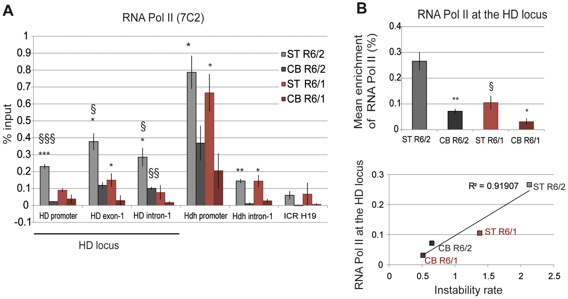 RNA Pol II at the HD locus in R6/1 and R6/2 striatum and cerebellum.
