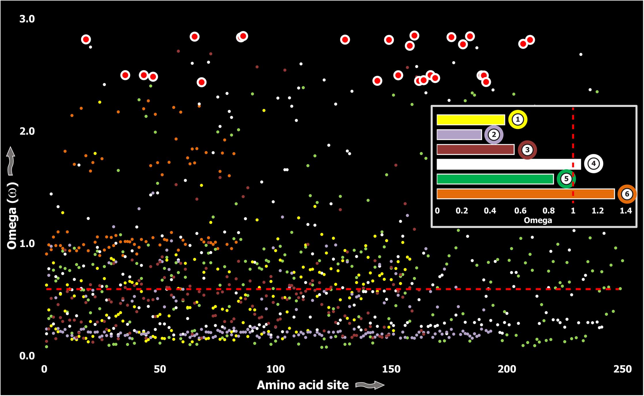 Molecular evolution of venom in Toxicofera lizards.