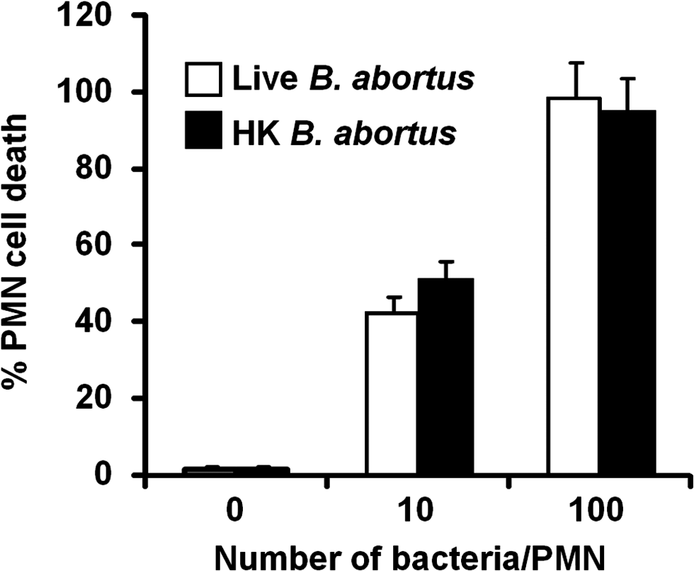 Live and heat-killed <i>B</i>. <i>abortus</i> induce PMN cell death.