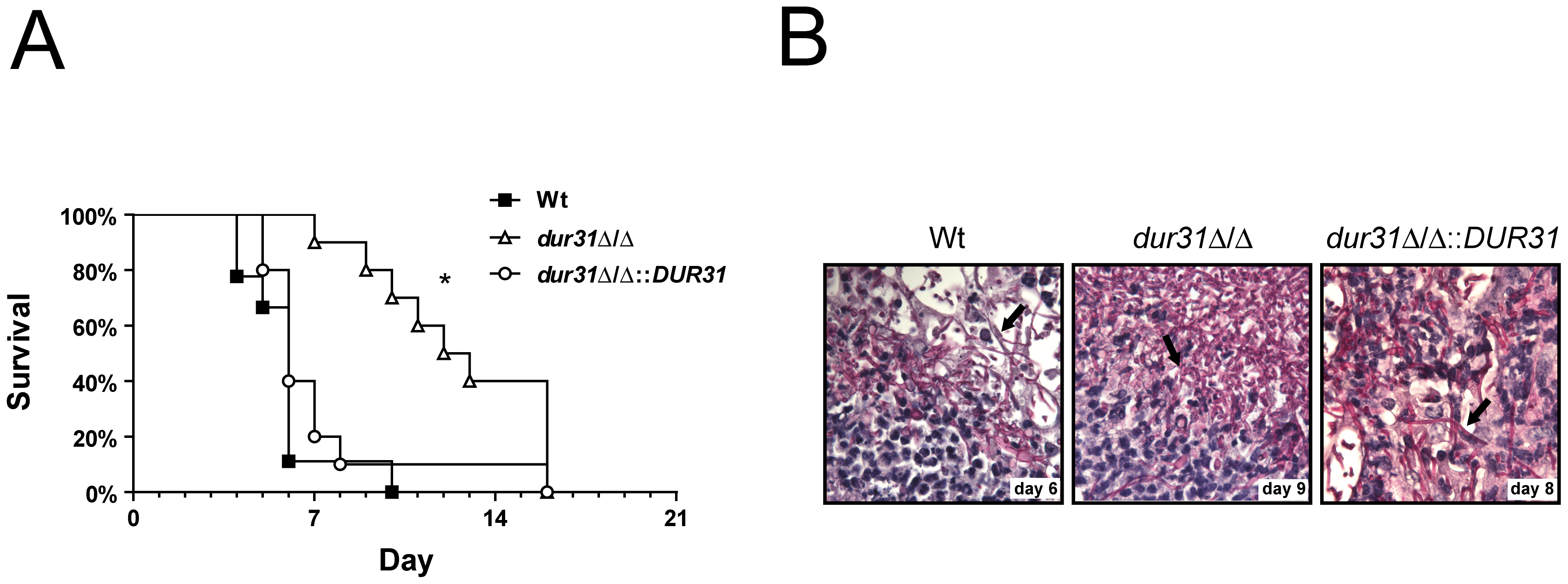 <i>DUR31</i> deletion attenuated virulence in a mouse model of hematogenously disseminated candidiasis.