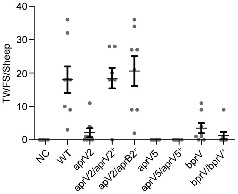 Virulence testing of isogenic isolates in sheep.