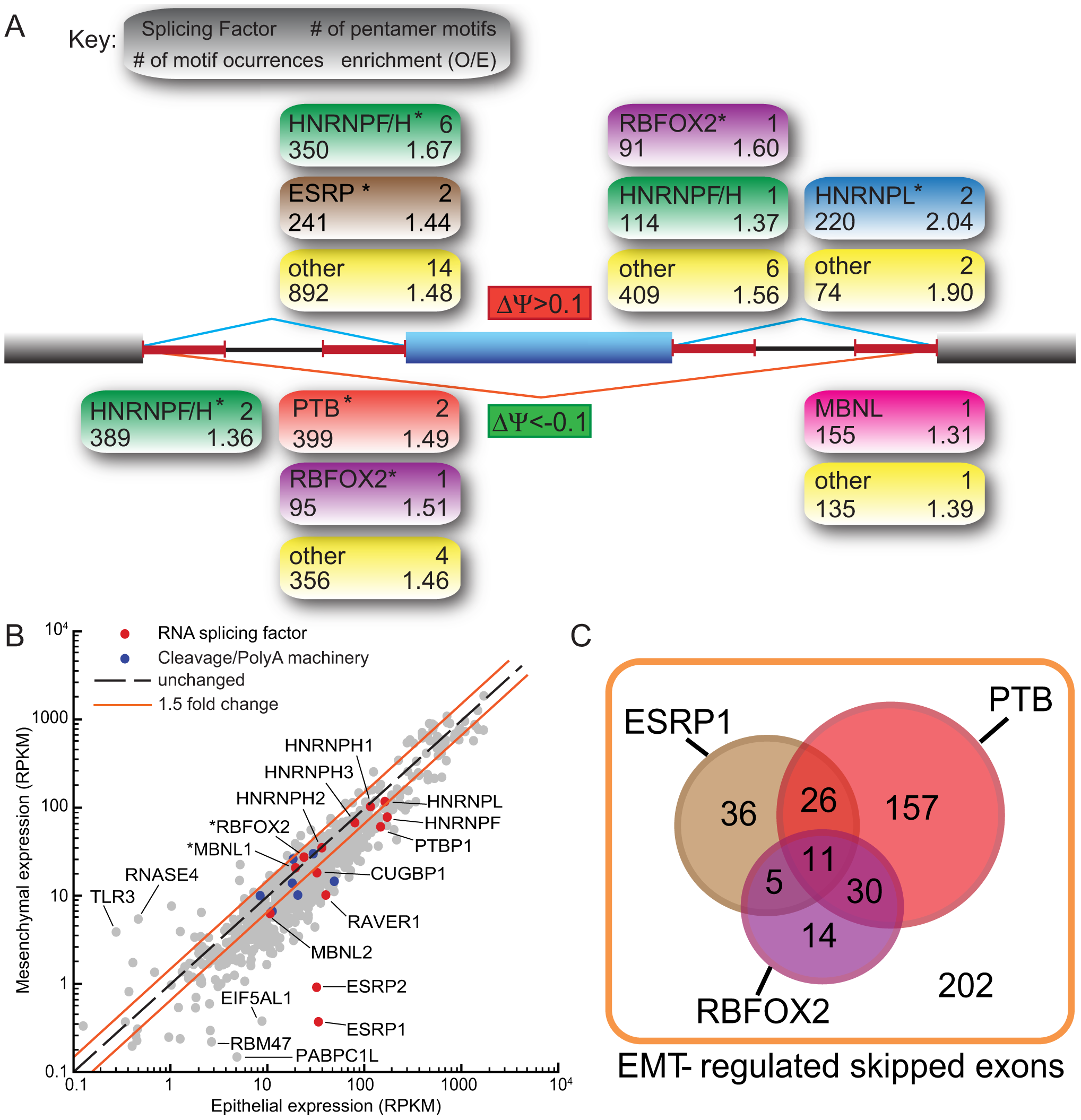 Motif analysis reveals splicing factors that are involved in the regulation of EMT–specific splicing.