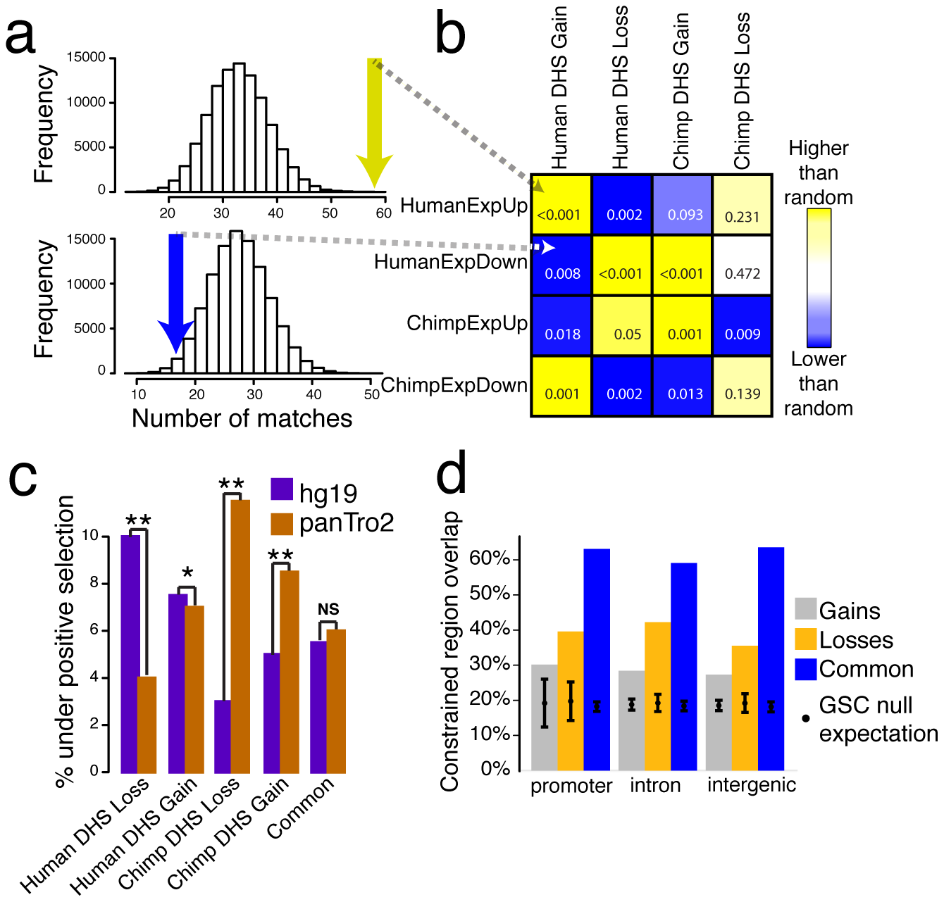 Species-specific DHS sites are correlated with expression and evolutionary selection.