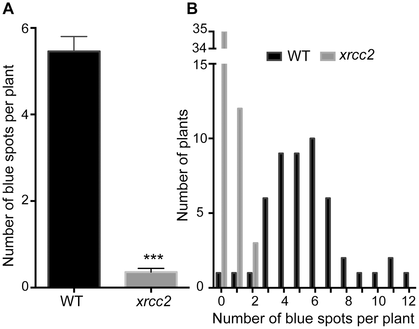 Spontaneous DGU.US recombination is reduced in the <i>xrcc2</i> mutant.