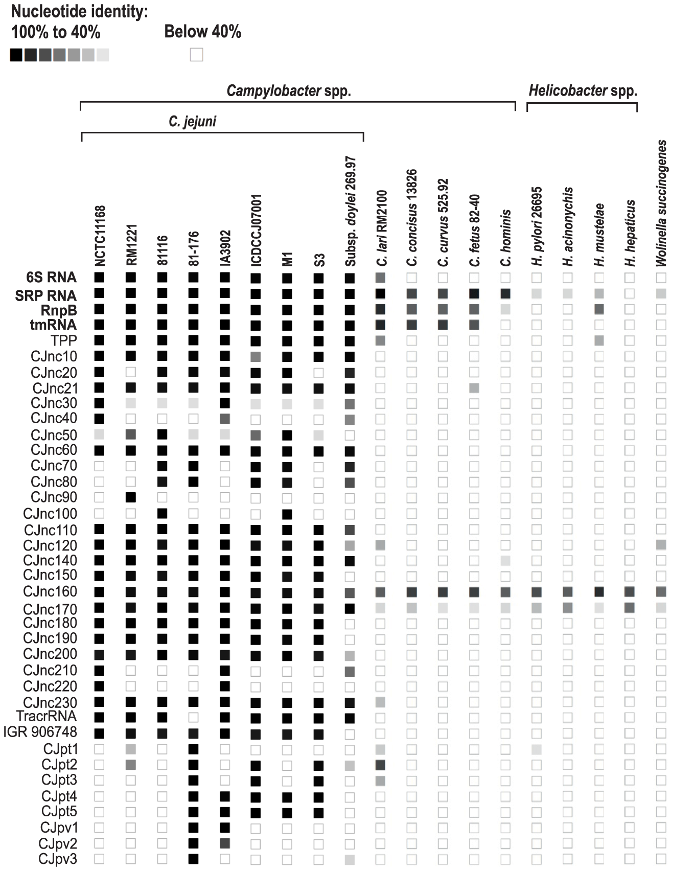 Conservation of <i>Campylobacter jejuni</i> sRNA candidates in Epsilonproteobacteria.