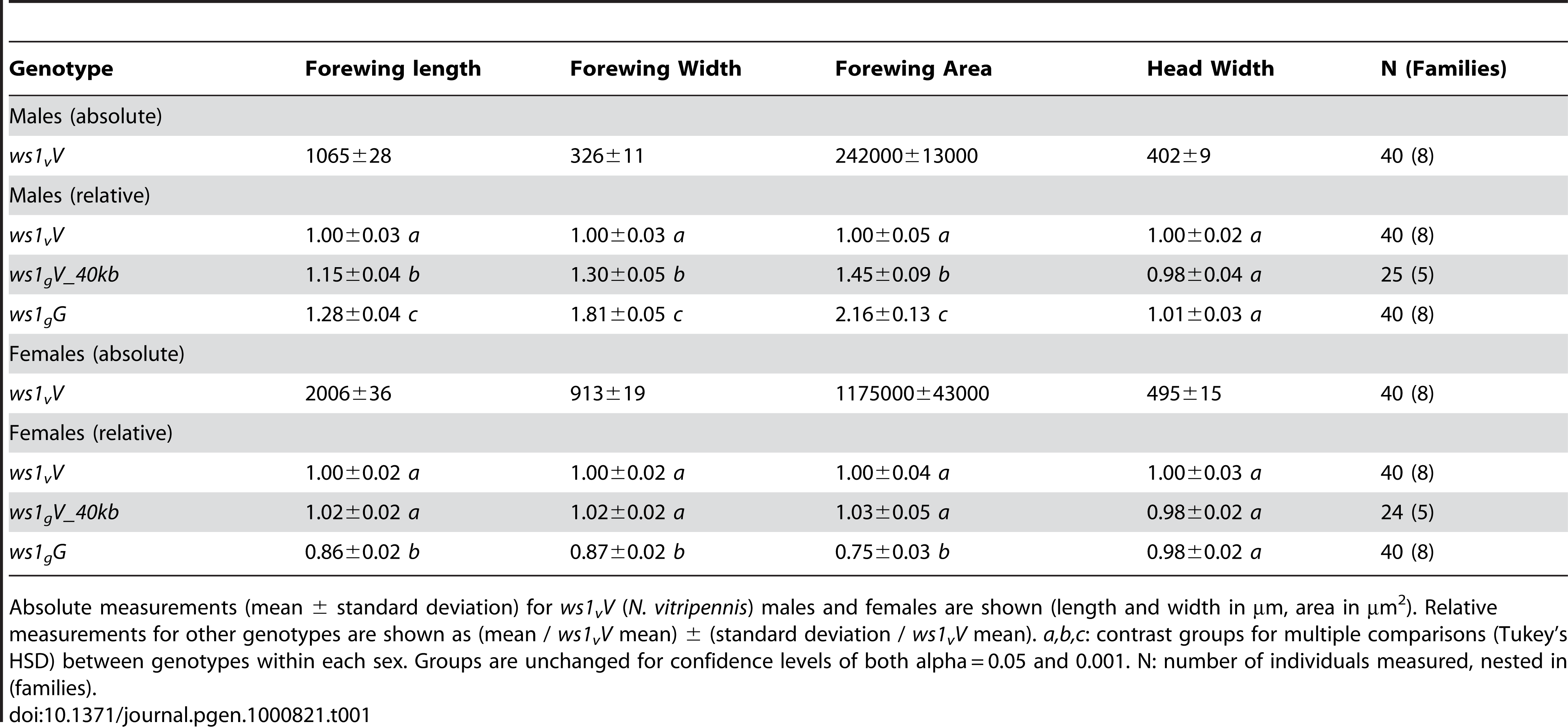 Basic wing measurements of <i>ws1</i> and wild-type strains.