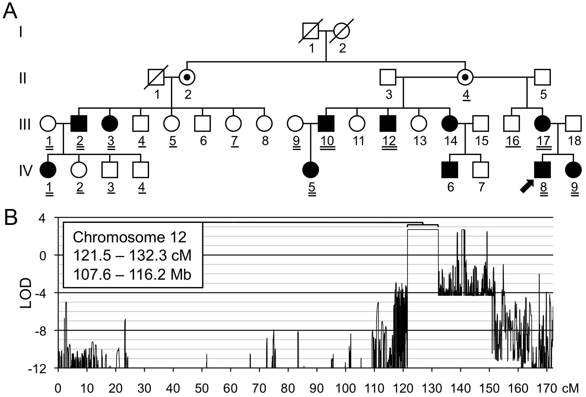 Linkage mapping of metachondromatosis to chromosome 12q.