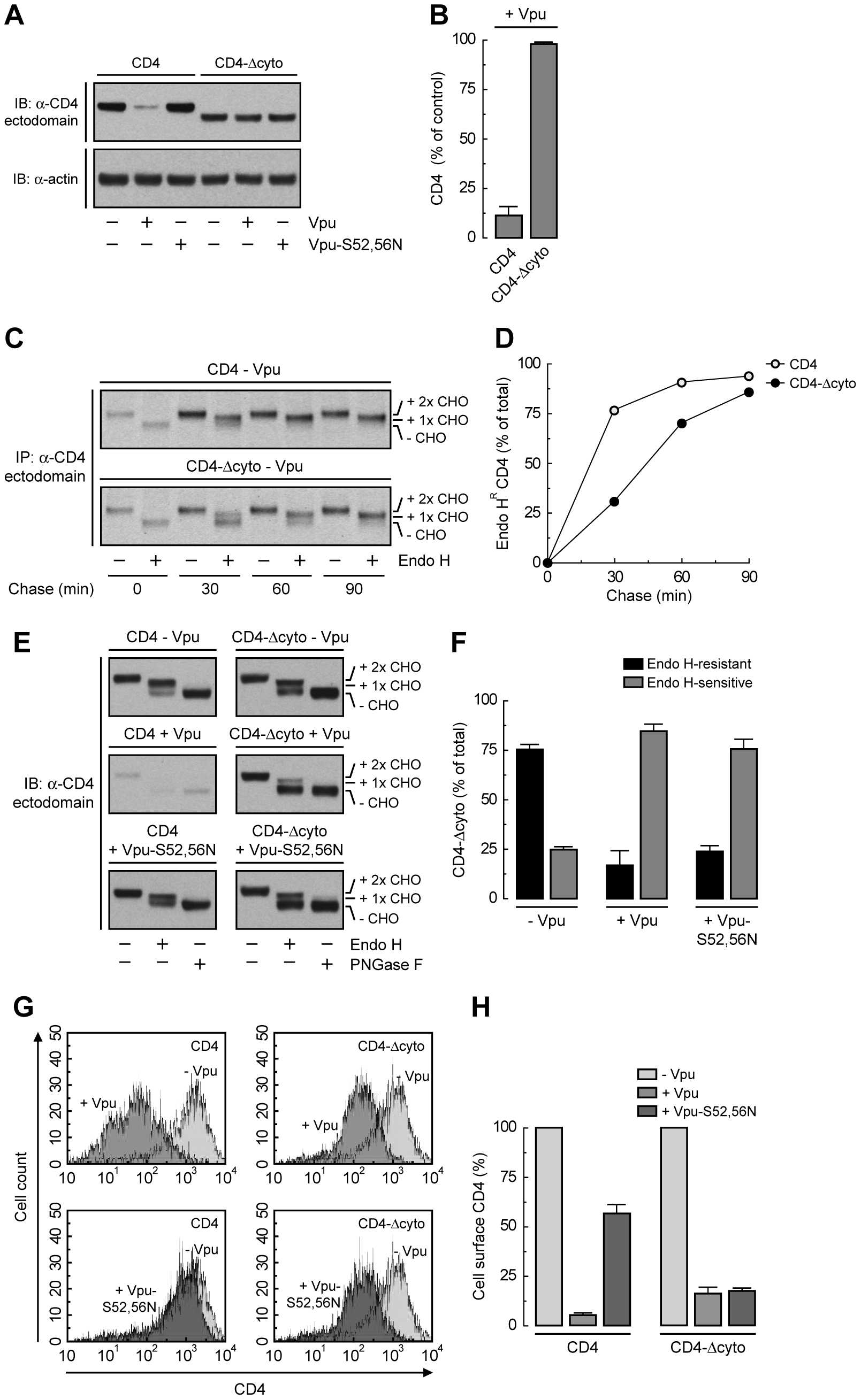 Deletion of CD4 cytosolic tail prevents degradation but not ER retention induced by Vpu.
